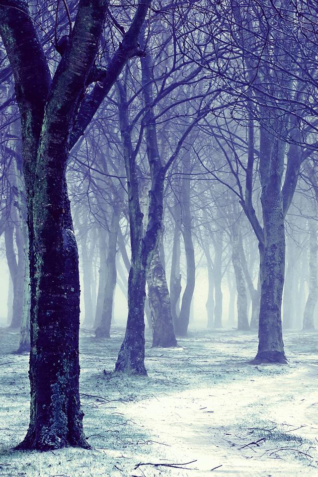 Darkwinter Dark Winter