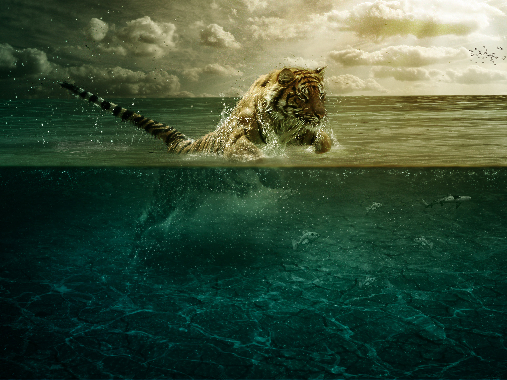 Ipad Wallpaper For Iphone X 8 7 6: Lion VS Fish Wallpaper For IPhone X, 8, 7, 6
