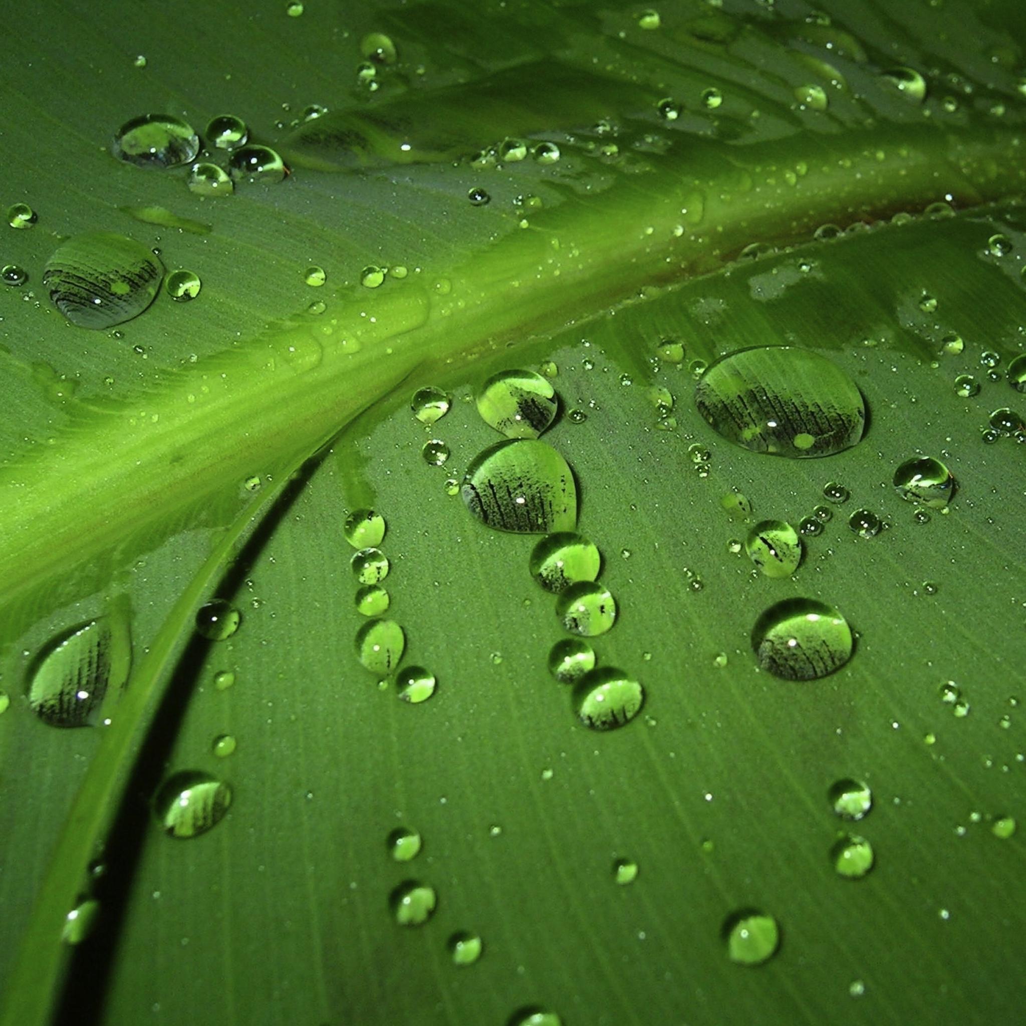 Drop of Water HD 3W iPad.jpg  Drop of Water HD   iPad