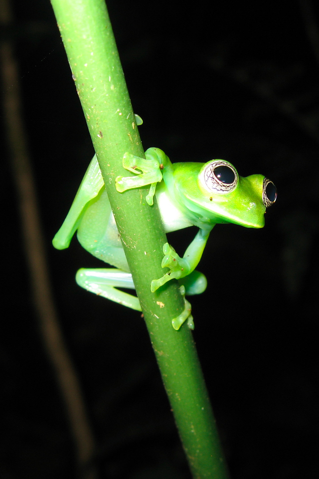 3wallpapers_Fonds d'ecran Glass_Frog