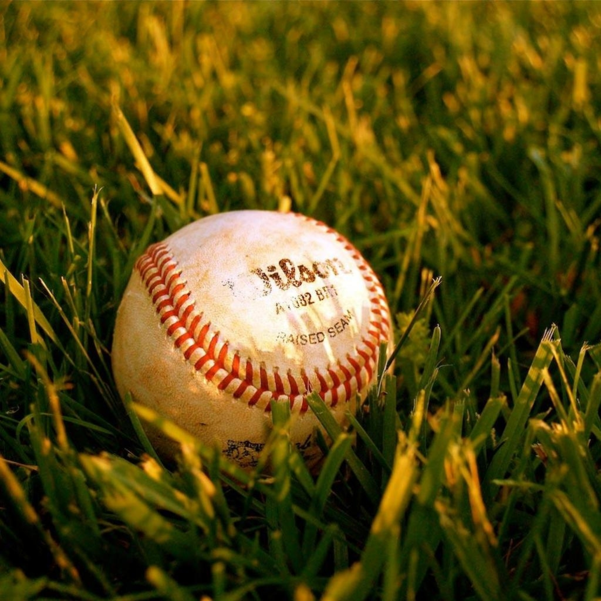 The baseball in the Grass 3W iPad.jpg  The baseball in the Grass   iPad