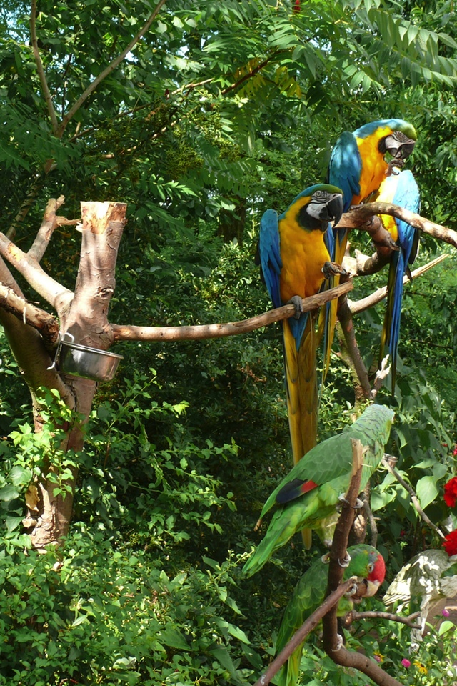 Both Funny Parrot 3W Both Funny Parrot
