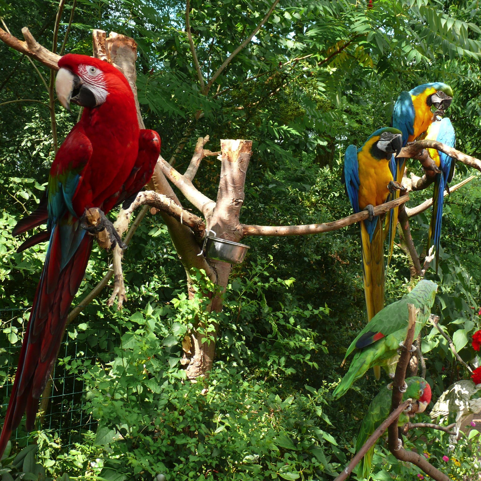Both Funny Parrot 3W iPad Both Funny Parrot   iPad