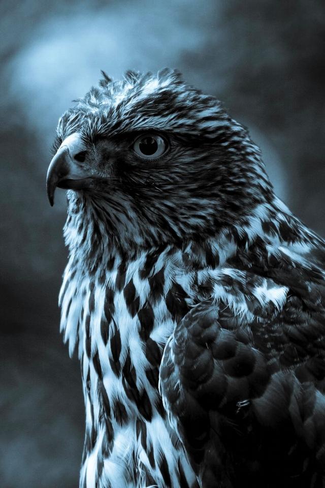 The Eagle Observer 3W The Eagle Observer