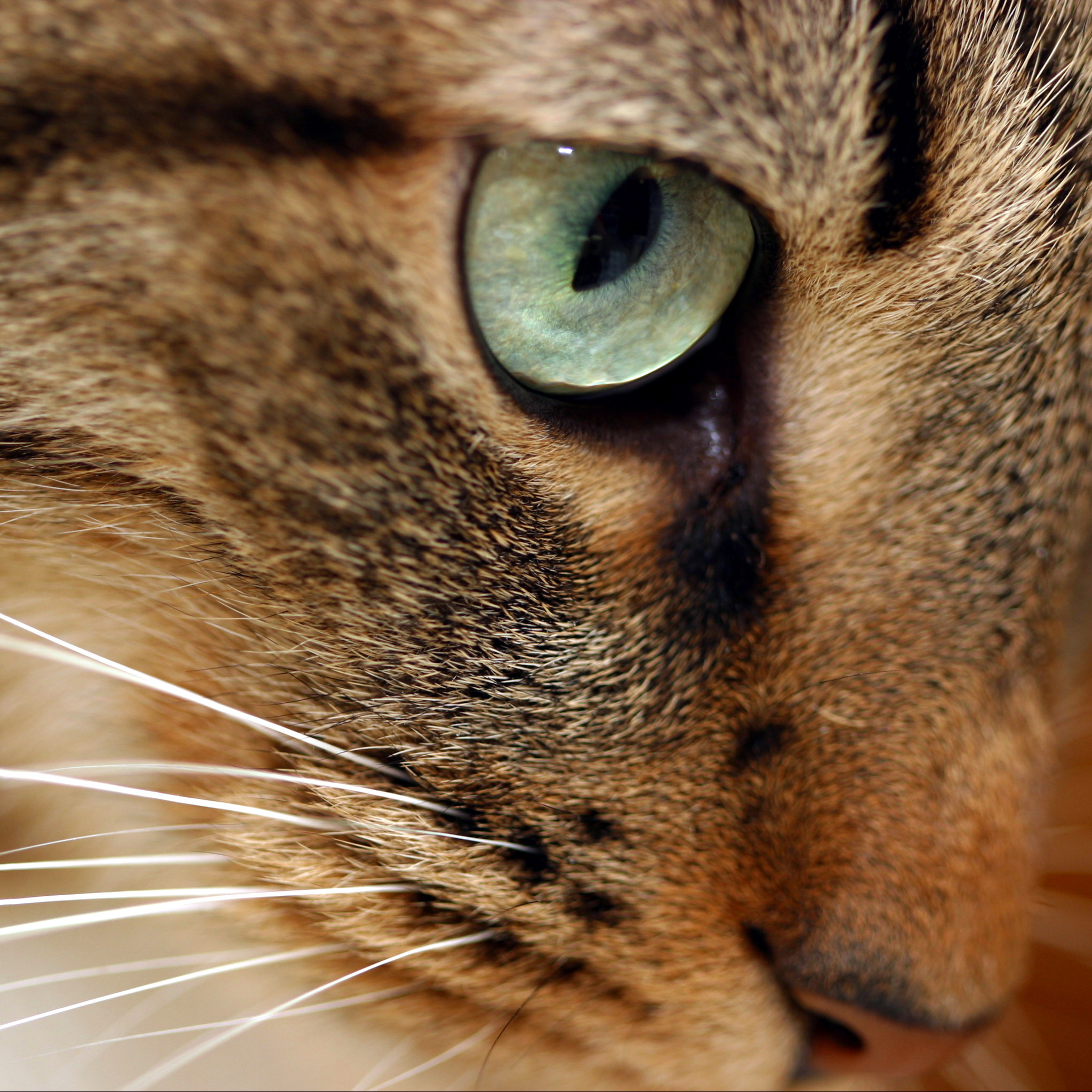 Eyes-Cat-3Wallpapers-iPad