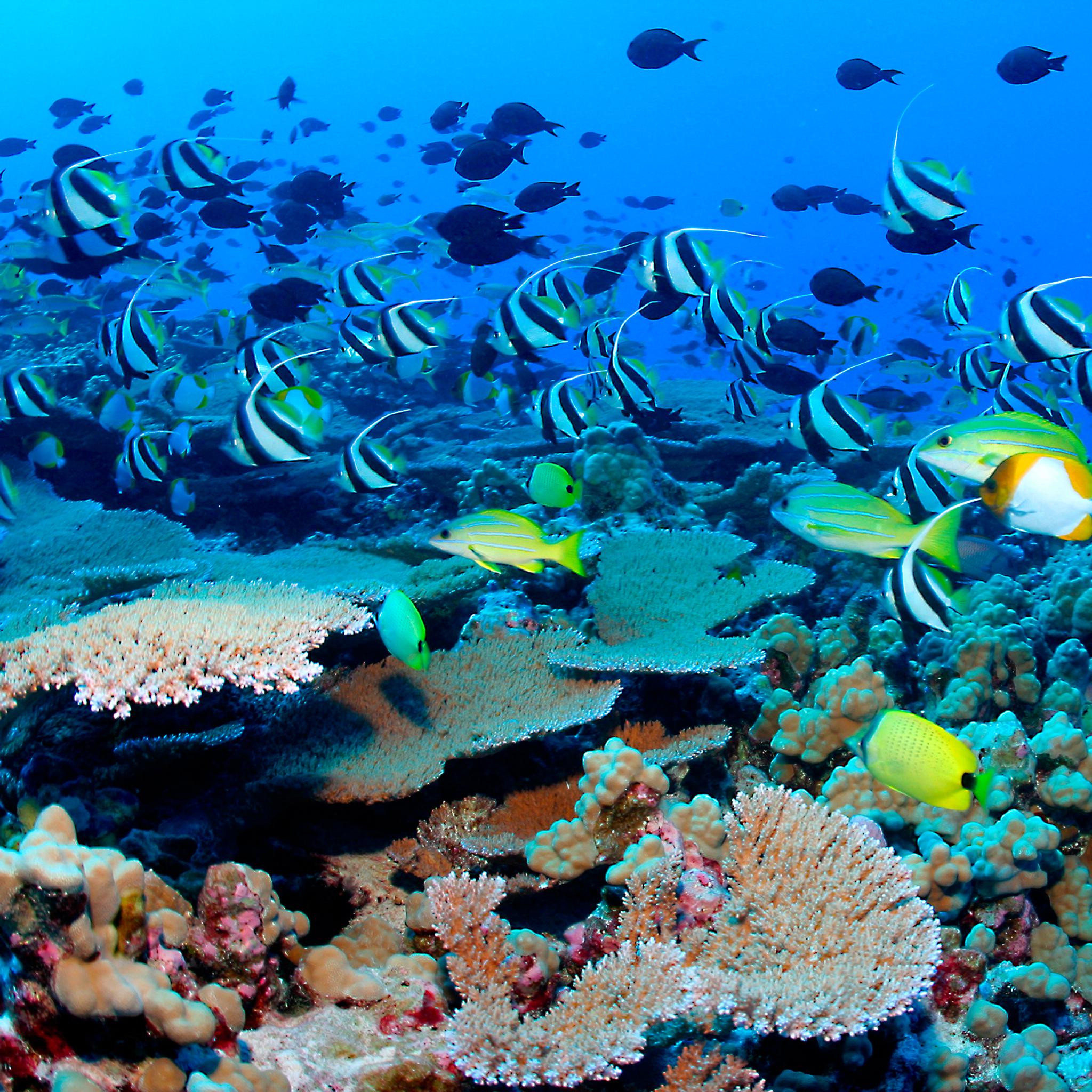Fish-Under-The-Sea-3Wallpapers-iPad