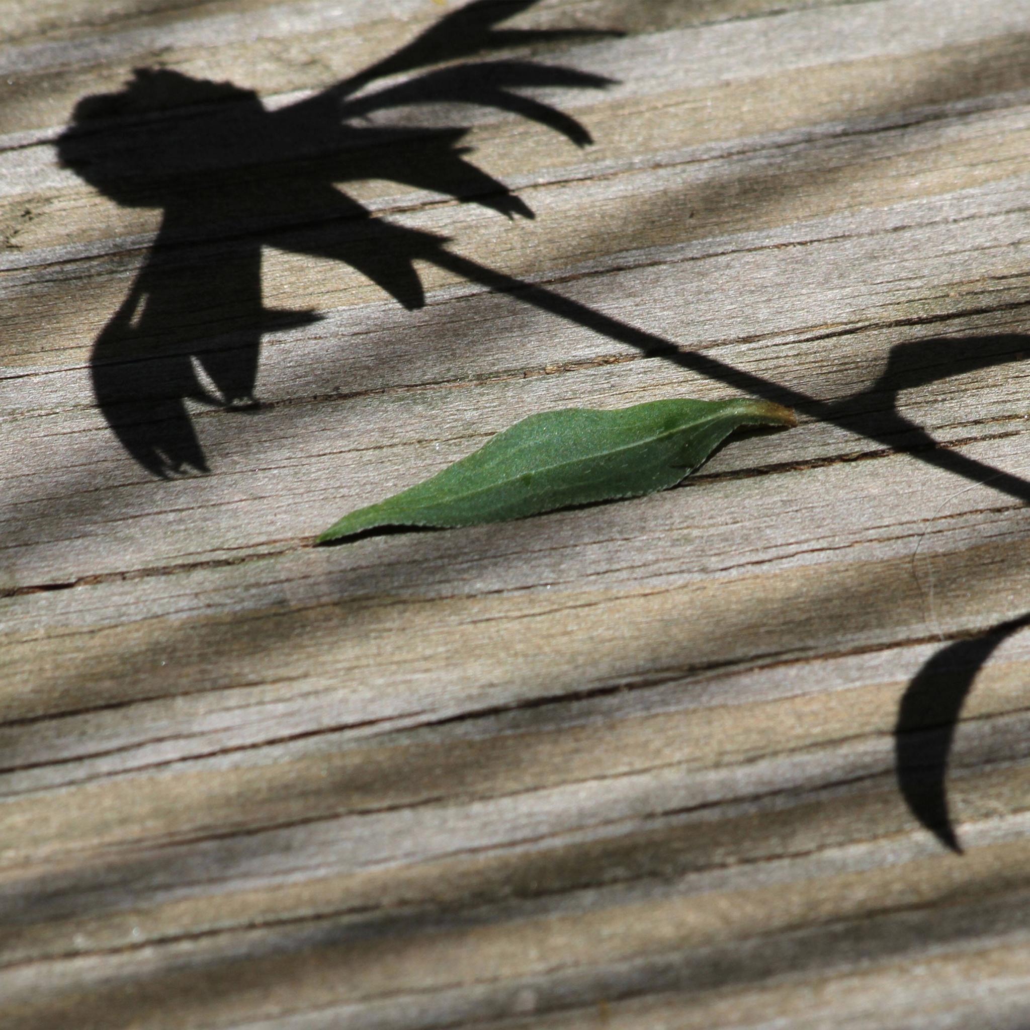 Shadow Plant 3Wallpapers iPad Shadow Plant   iPad