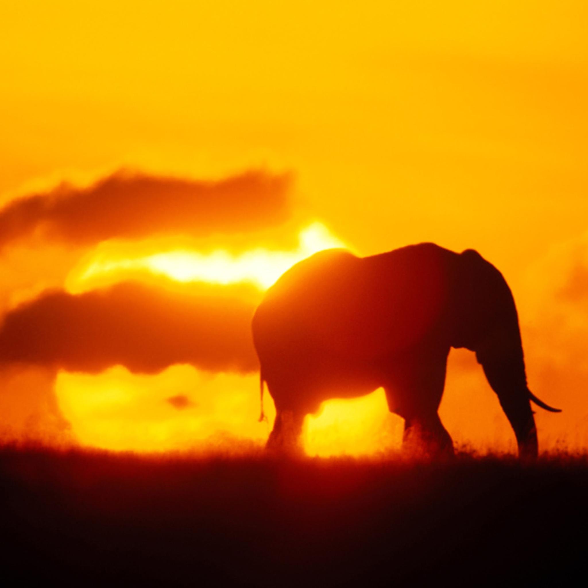 Sunrise Elephant 3Wallpapers iPad Sunrise Elephant   iPad
