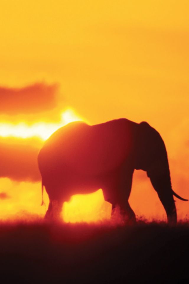 Sunrise-Elephant-3Wallpapers