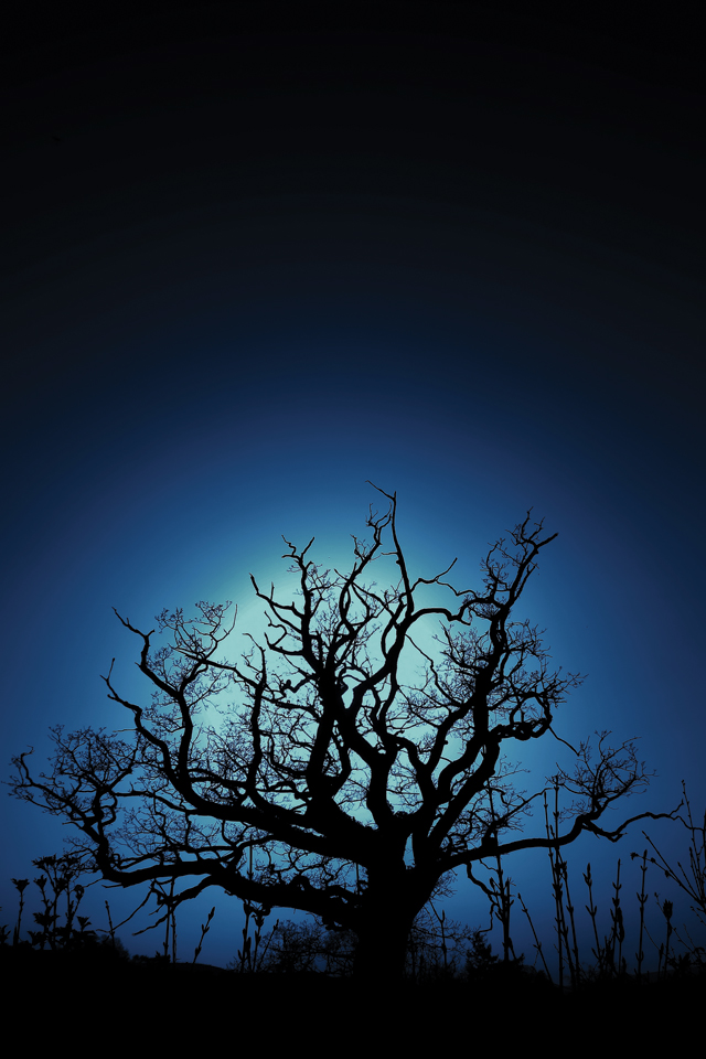 Dark Three 3Wallpapers Dark Tree