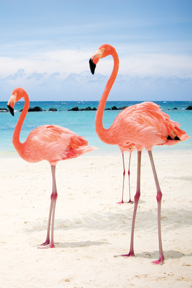 Flamant-Rose-3Wallpapers