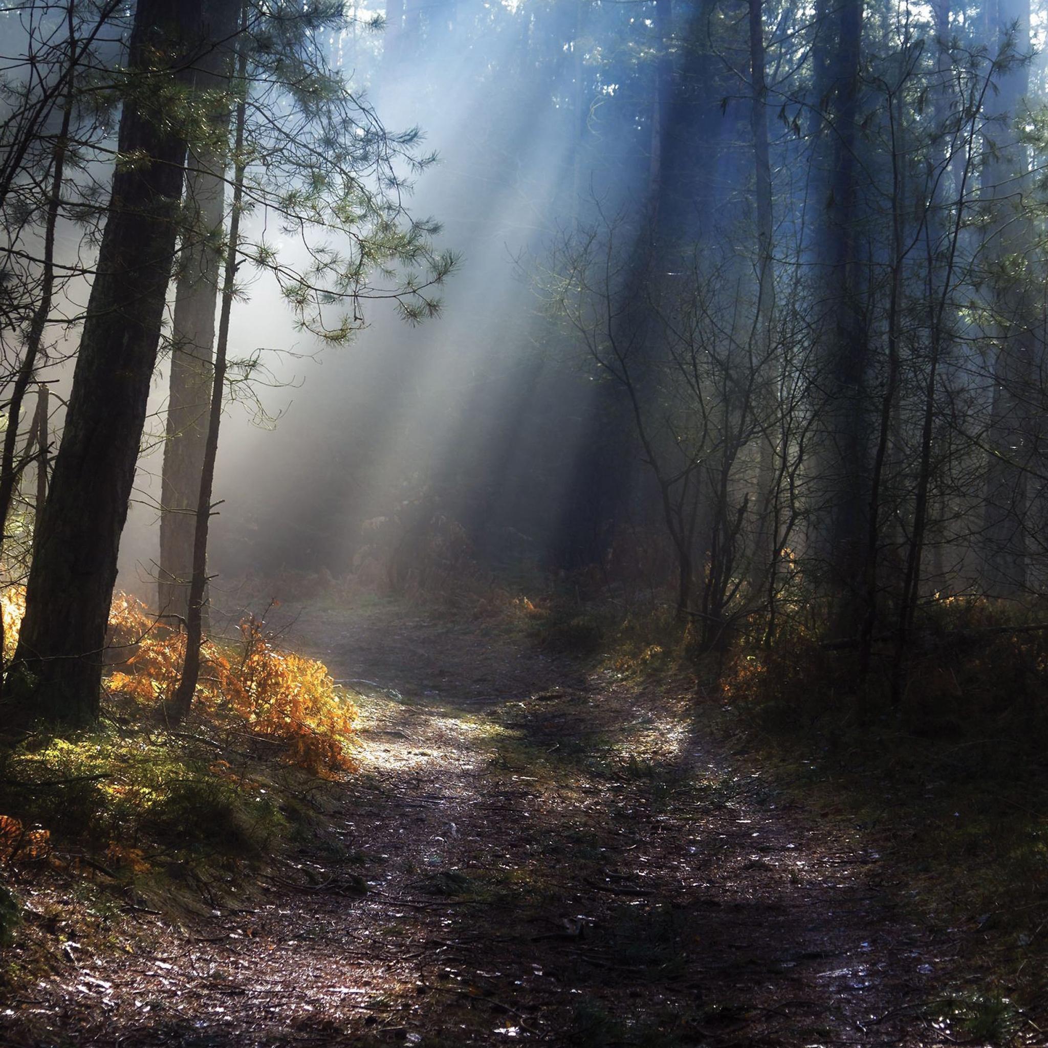 Forest Light 3Wallpapers iPad Retina Forest Light   iPad Retina