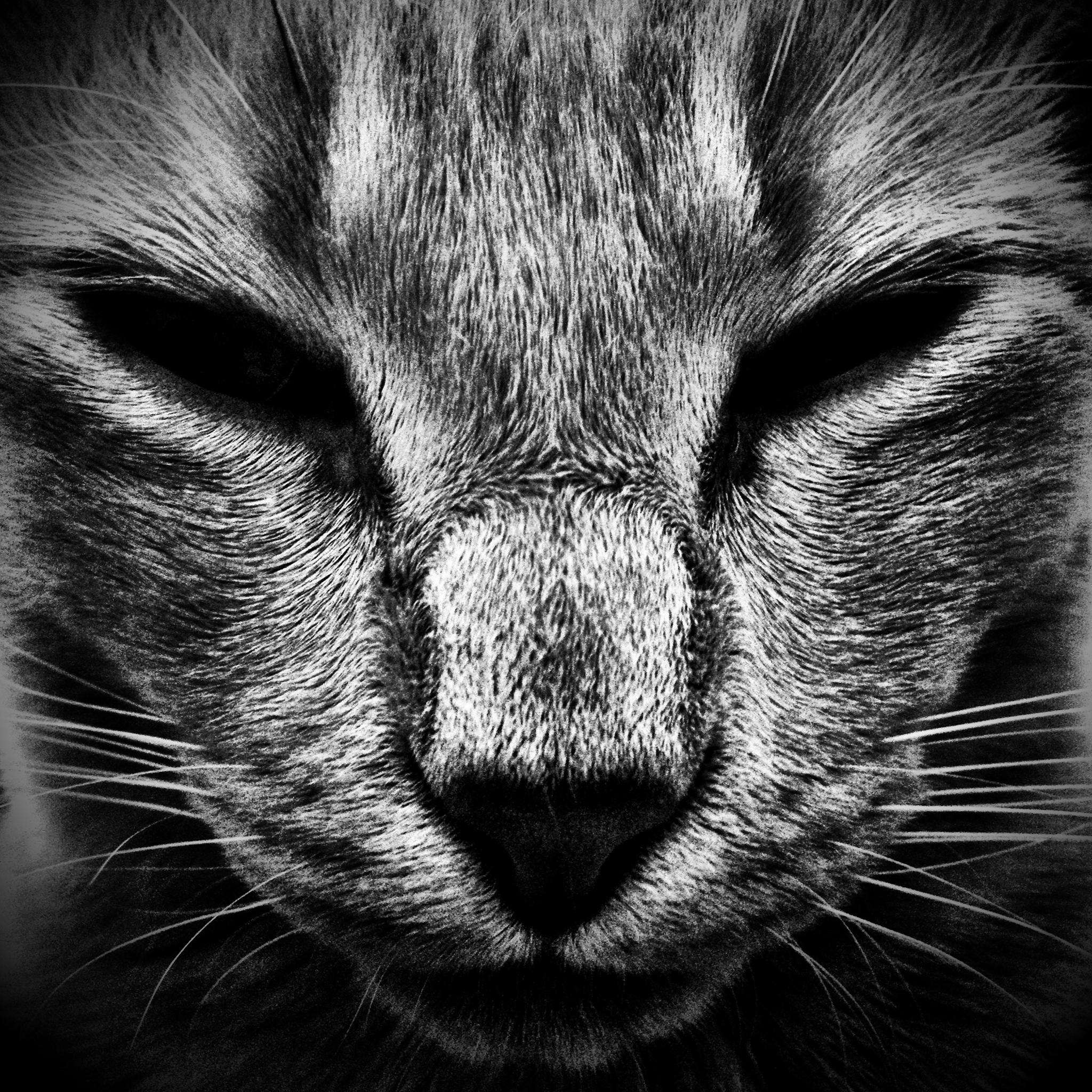 Black Cat 3Wallpapers ipad Retina Black Cat   iPad Retina
