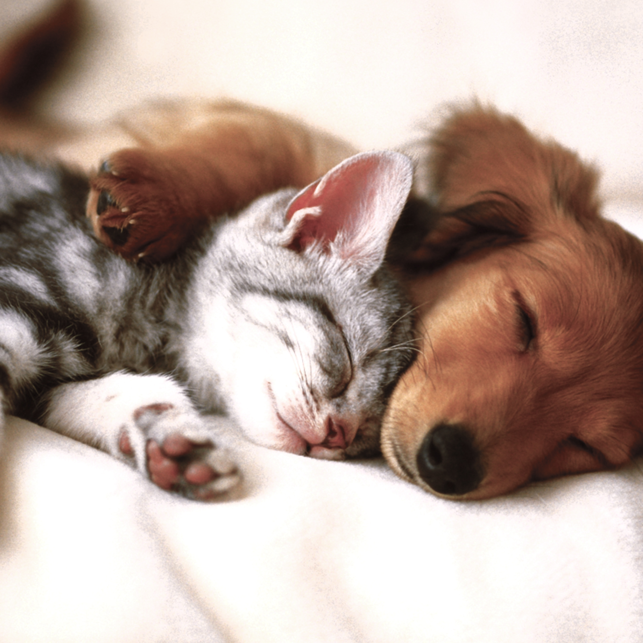 Cat And Dog Ipad Retina Wallpaper For Iphone X 8 7 6 Free