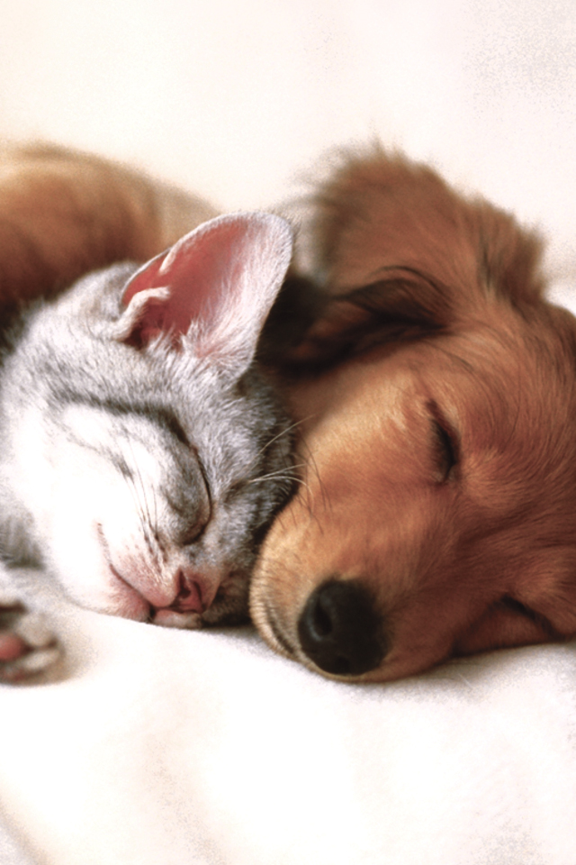 Cat-and-Dog-3Wallpapers