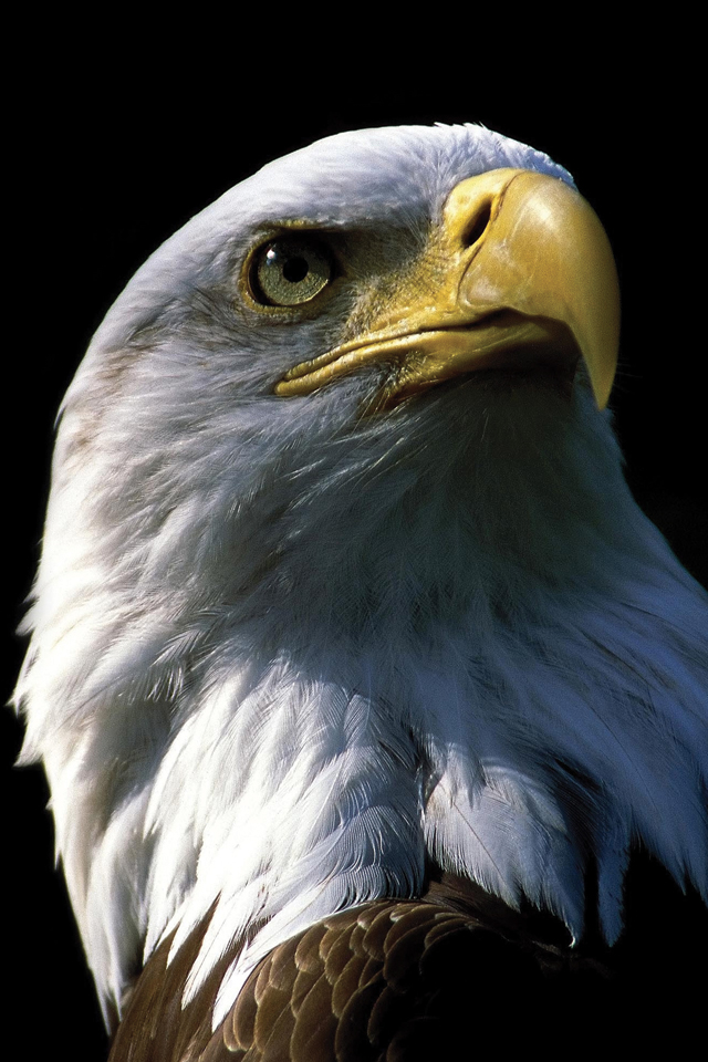 Eagle-3Wallpapers
