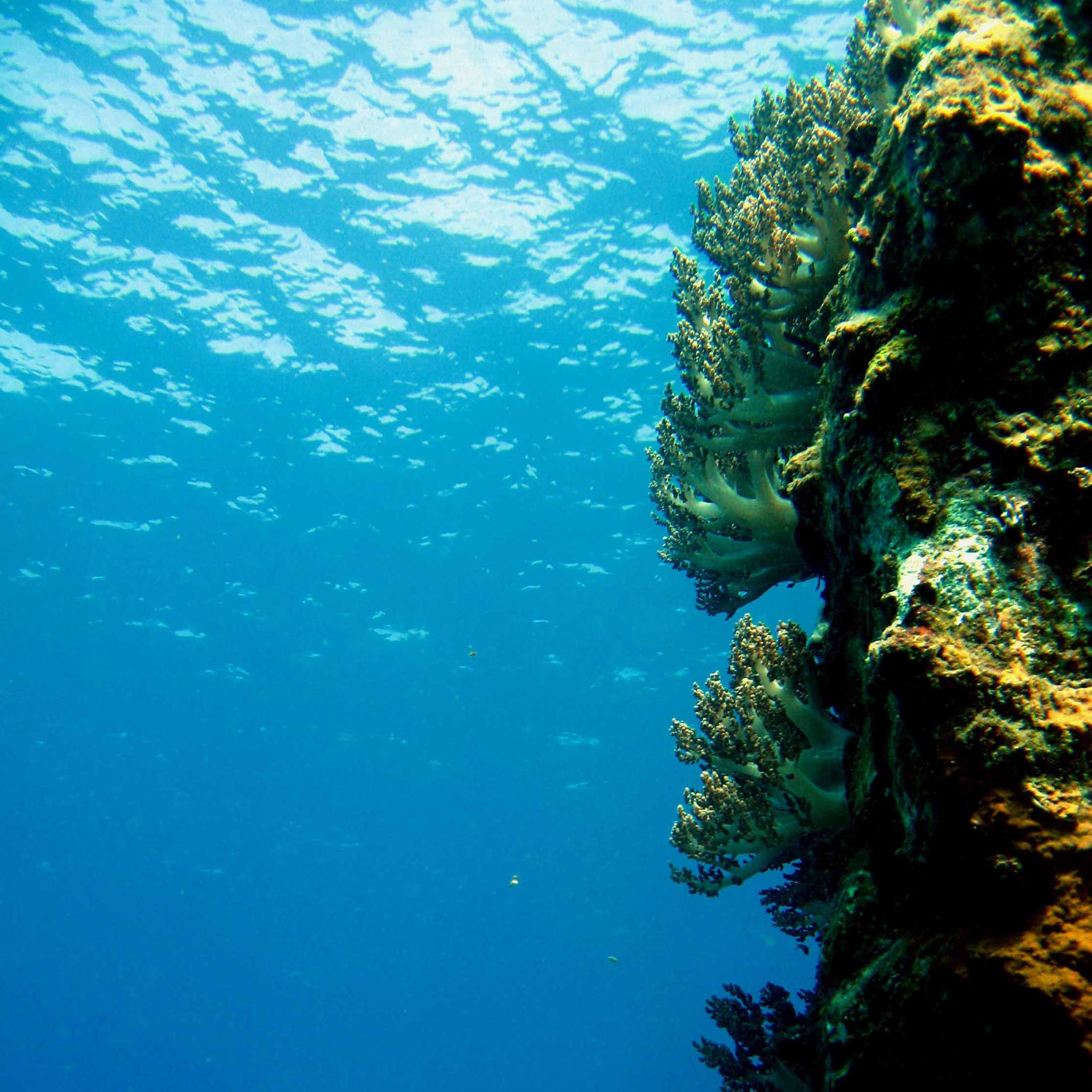 Ocean Diving 3Wallpapers iPad Retina Ocean Diving   iPad Retina