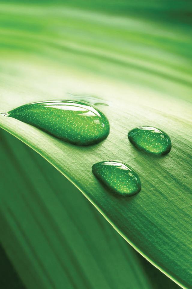 Green-Drop-3Wallpapers