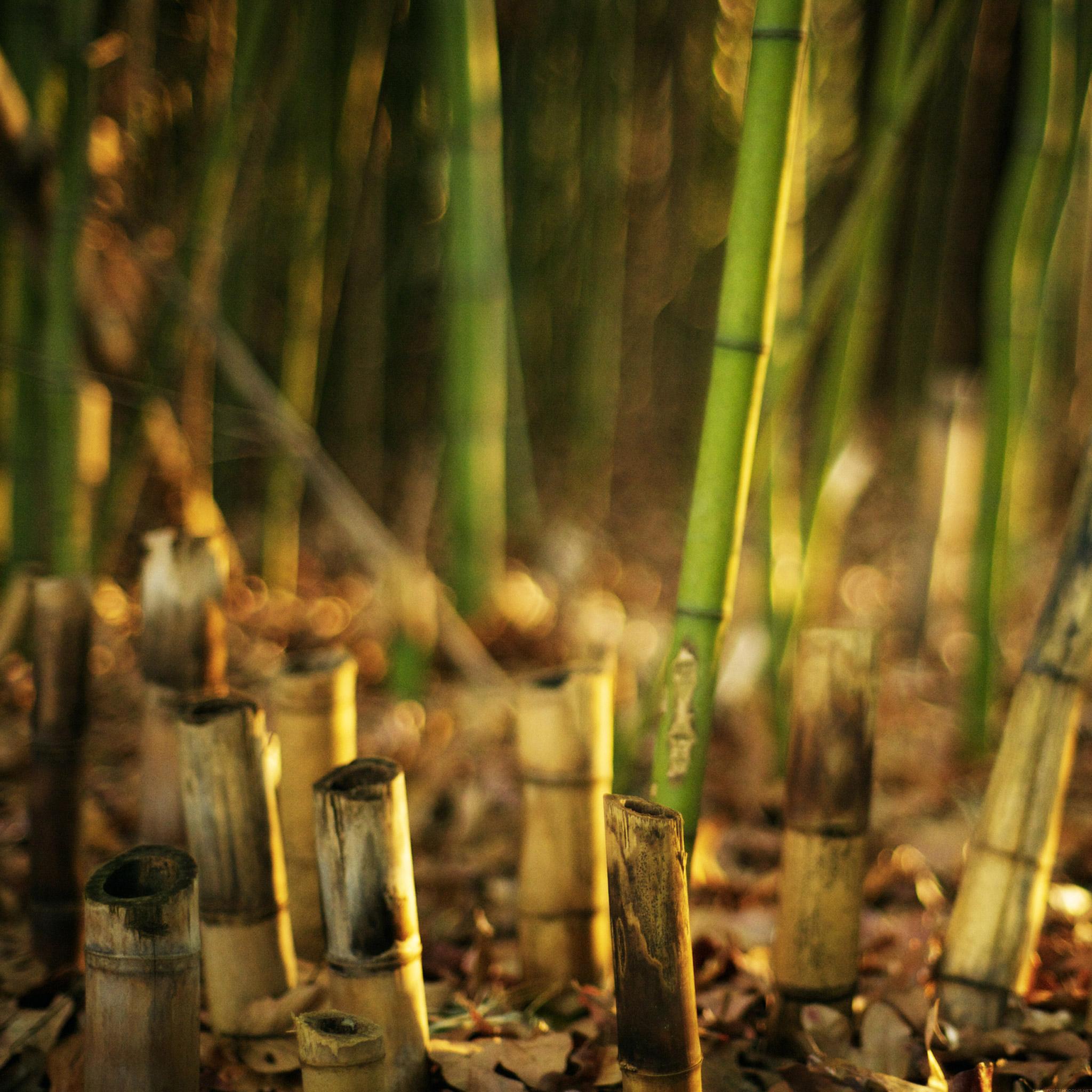 Bamboo 3Wallpapers iPad Retina Bamboo   iPad Retina