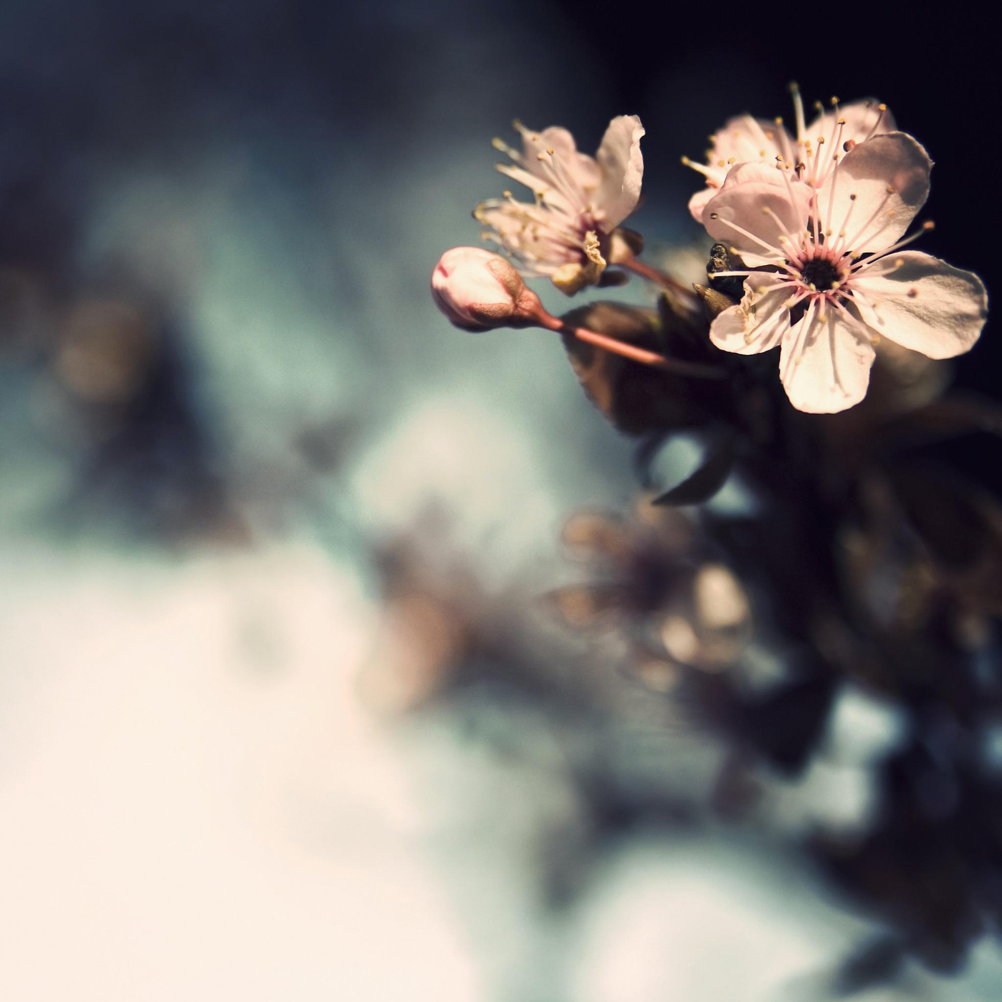 Pink-Flowers-3Wallpapers-iPad-Retina
