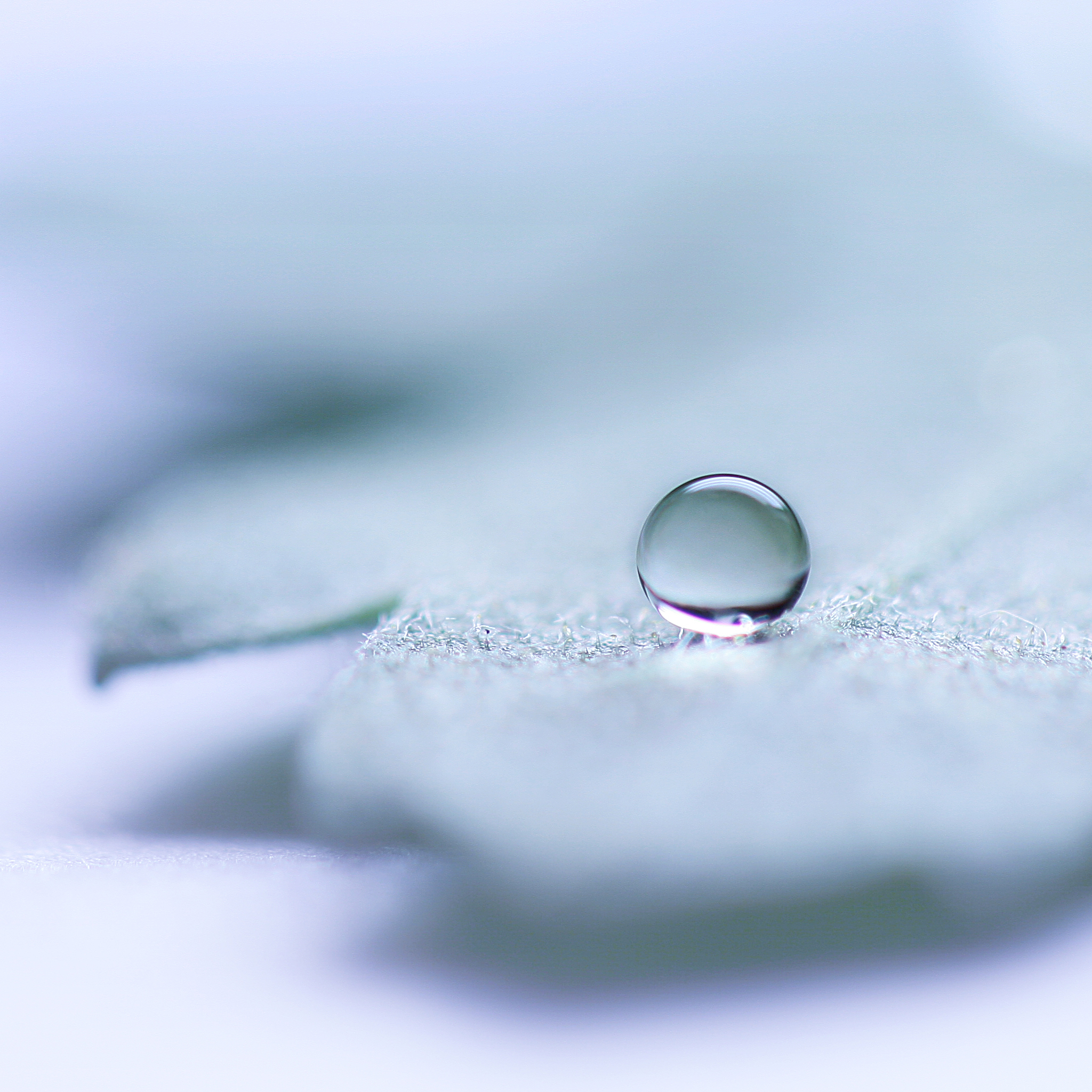 The-Only-Drop-3Wallpapers-iPad-Retina