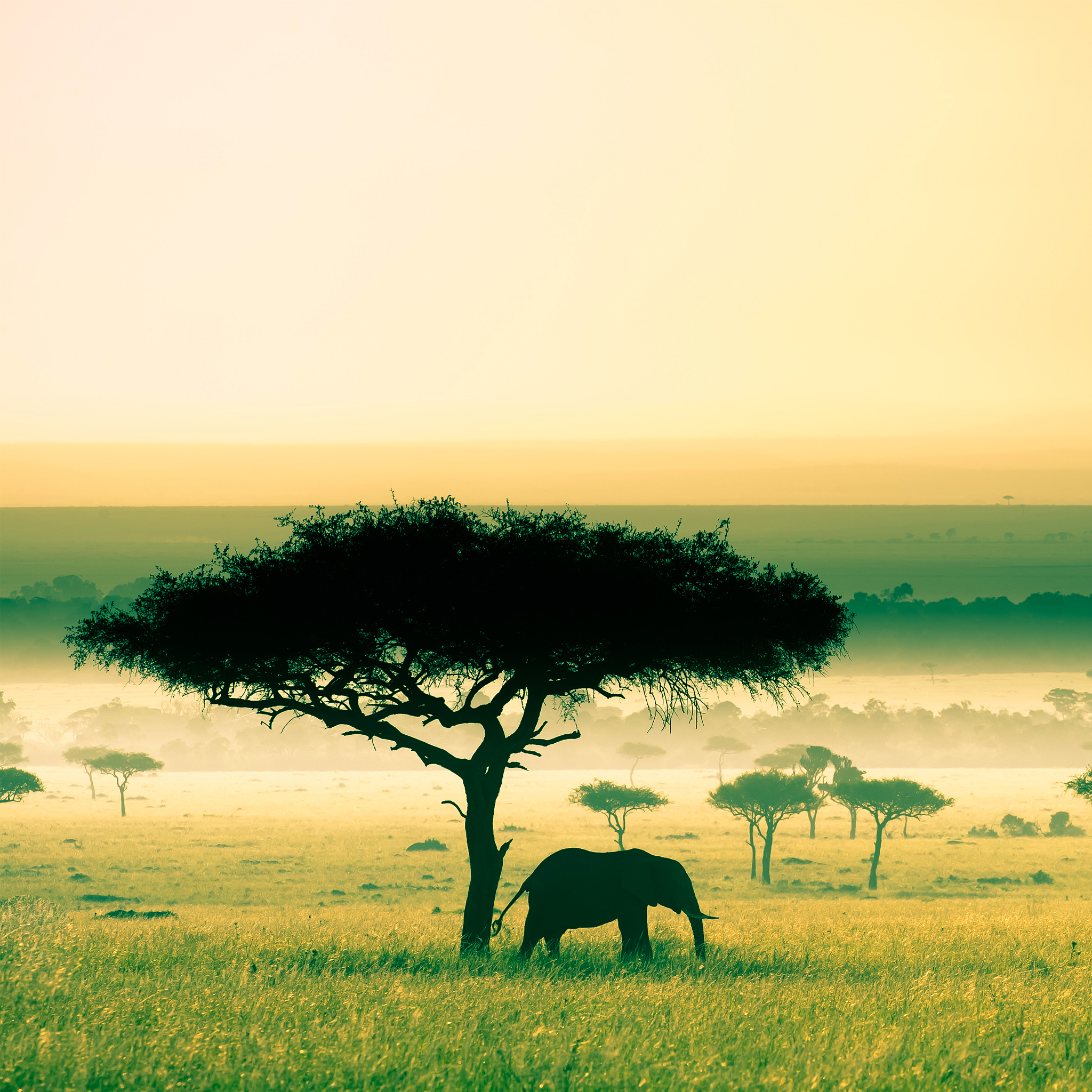 Africa-3Wallpapers-iPad-Retina