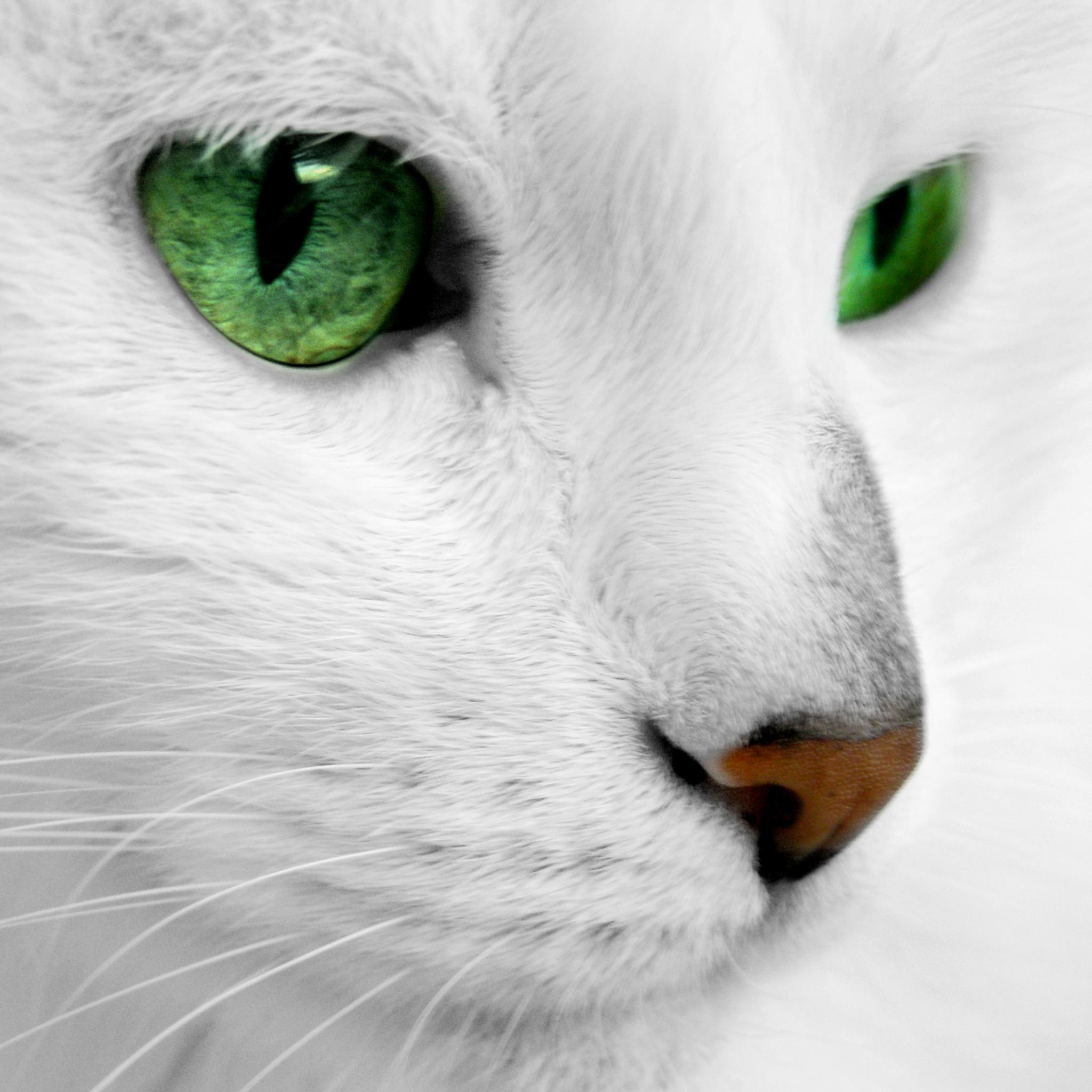 Cat-Eye-Green-3Wallpapers-ipad-Retina