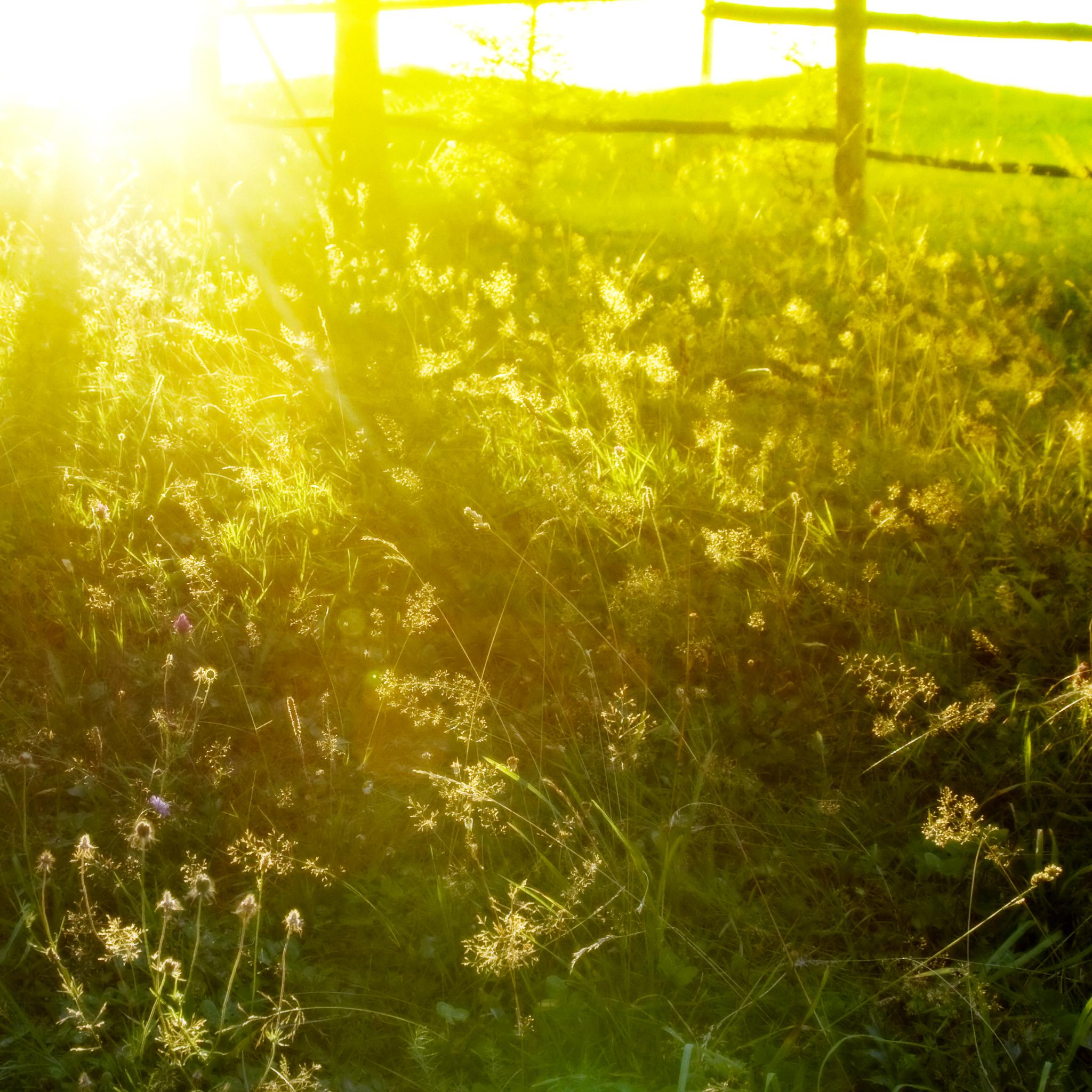 Sunshine-Field-3Wallpapers-iPad-Retina