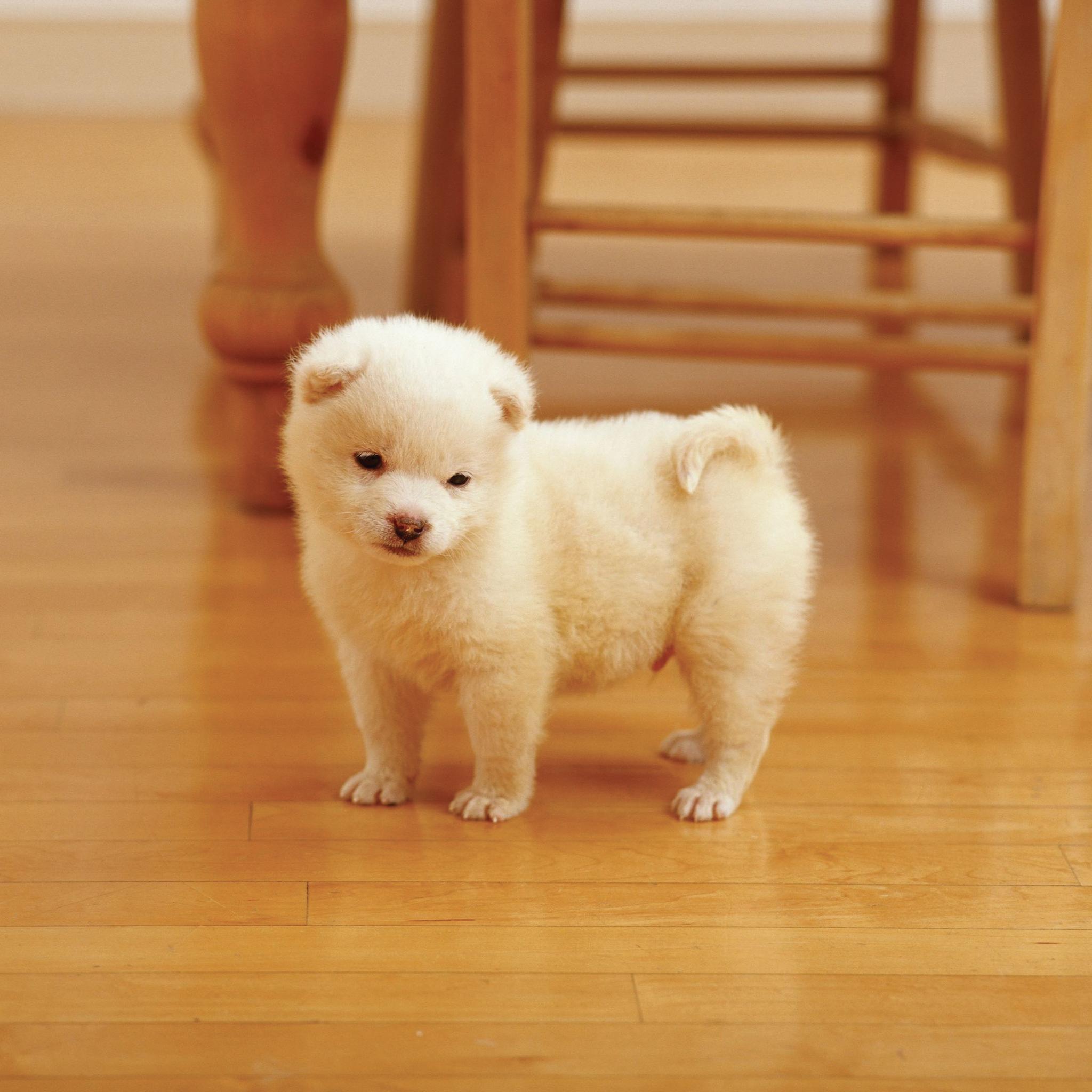 Dogs-Puppy-3Wallpapers-ipad-Retina