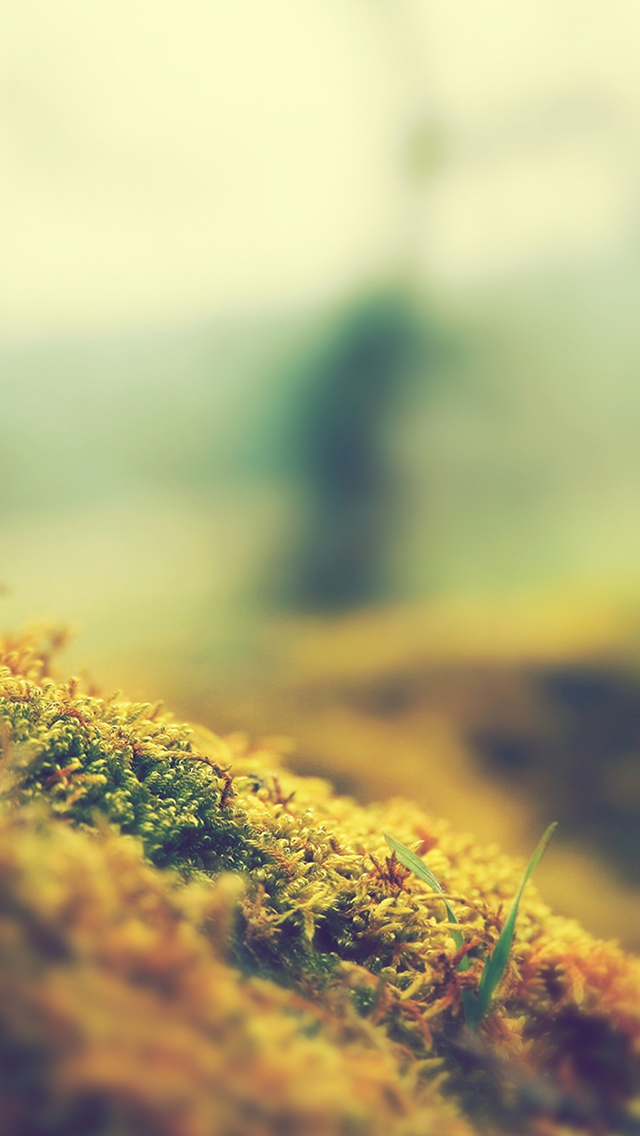 Nature-3Wallpapers-iPhone-5