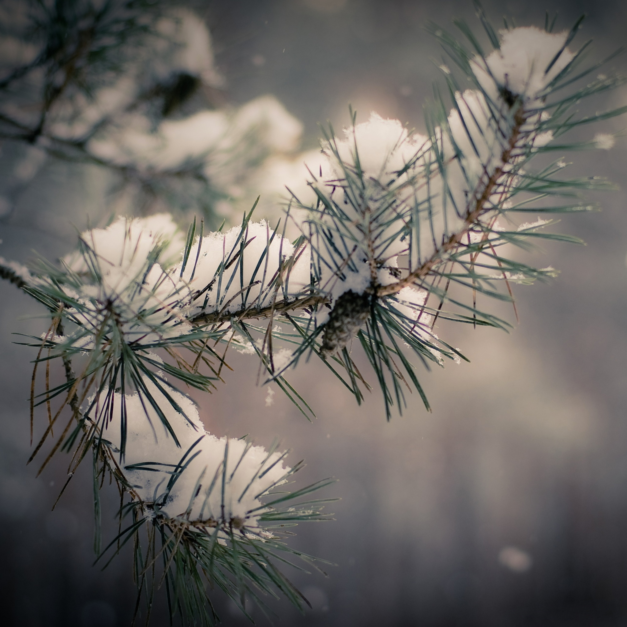 Needles-and-Snow-3Wallpapers-iPad-Retina