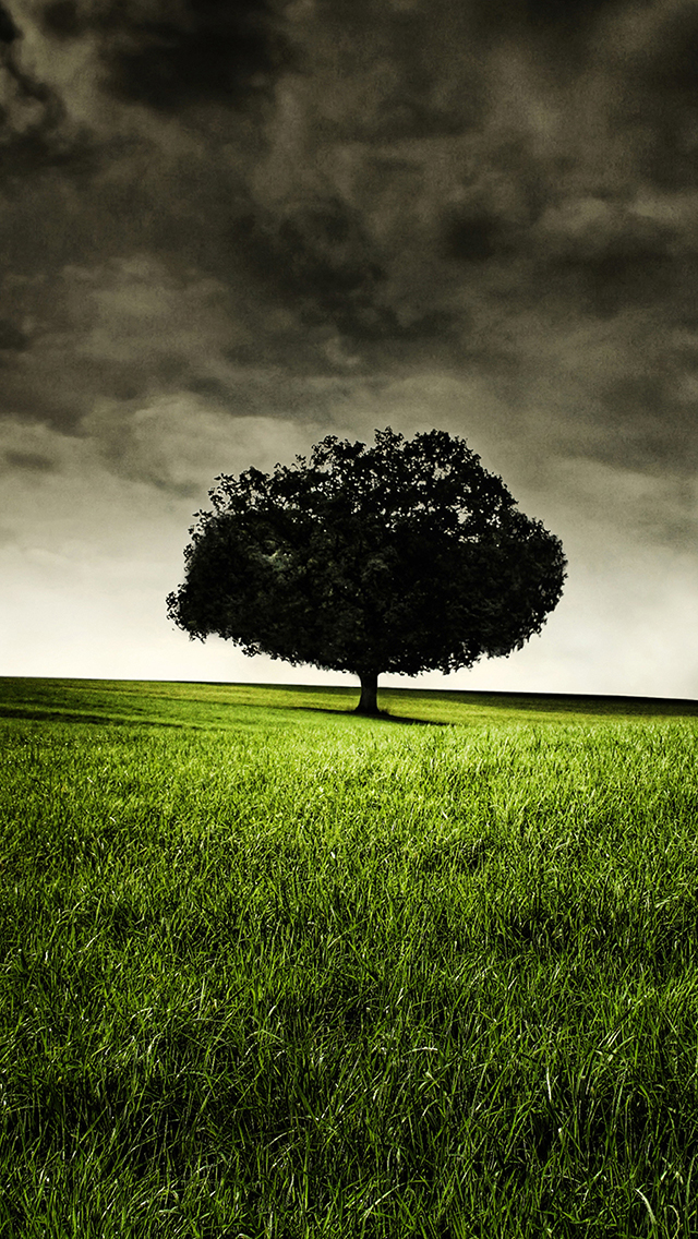 Single-Tree-on-Hill-3Wallpapers-iPhone-5