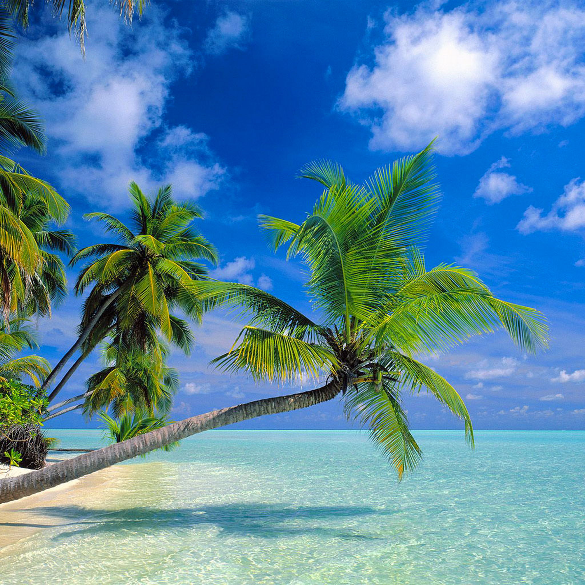Tropical-Paradise-3Wallpapers-iPad-Retina