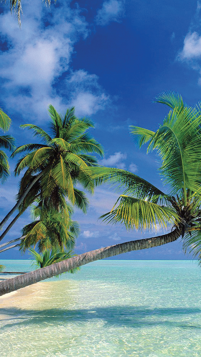 Tropical-Paradise-3Wallpapers-iPhone-5