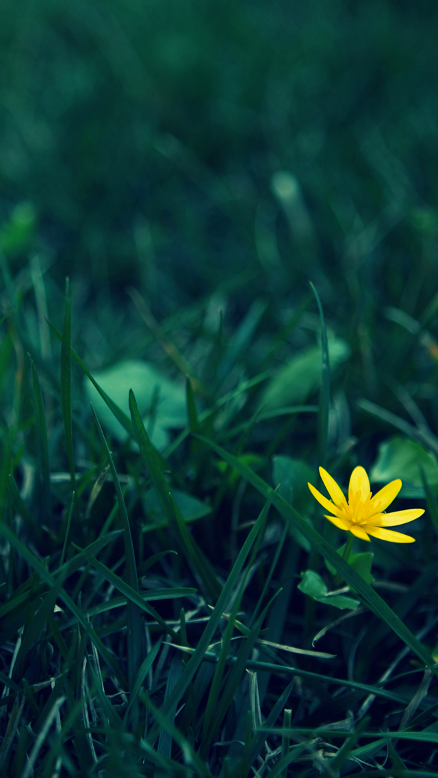 Yellow-Flower-Photography-3Wallpapers-iPhone-5