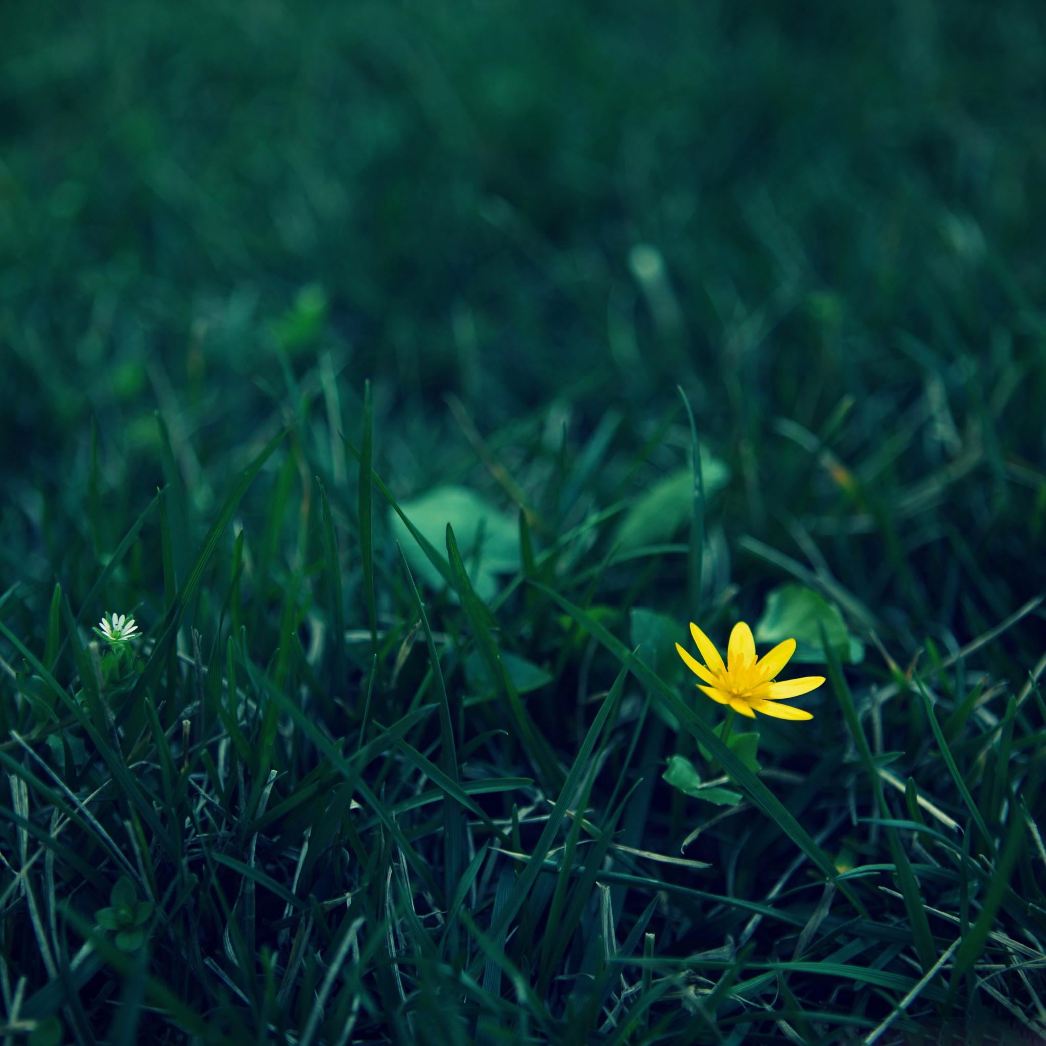 Yellow-FlowerPhotography-3Wallpapers-iPad-Retina