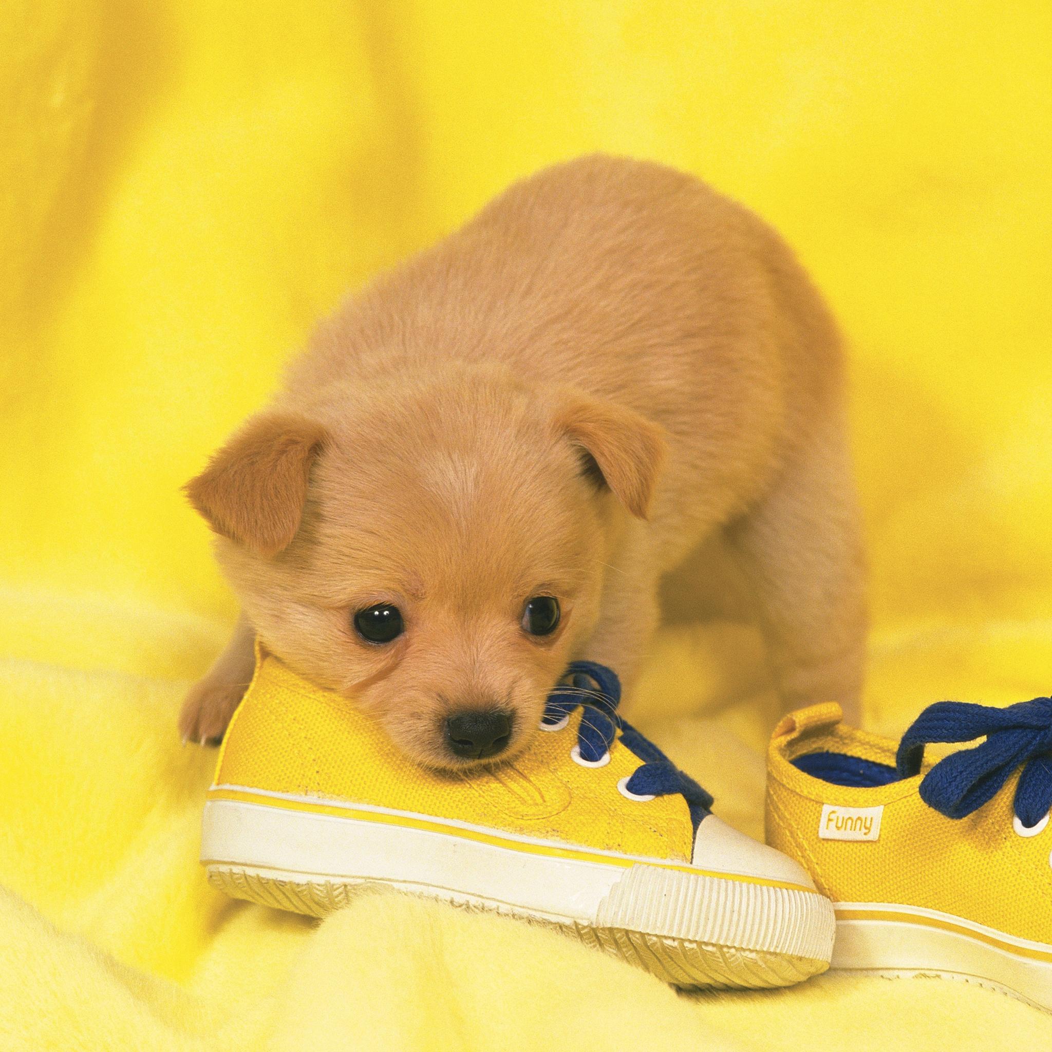 Yellow-Puppy-3Wallpapers-iPad-Retina