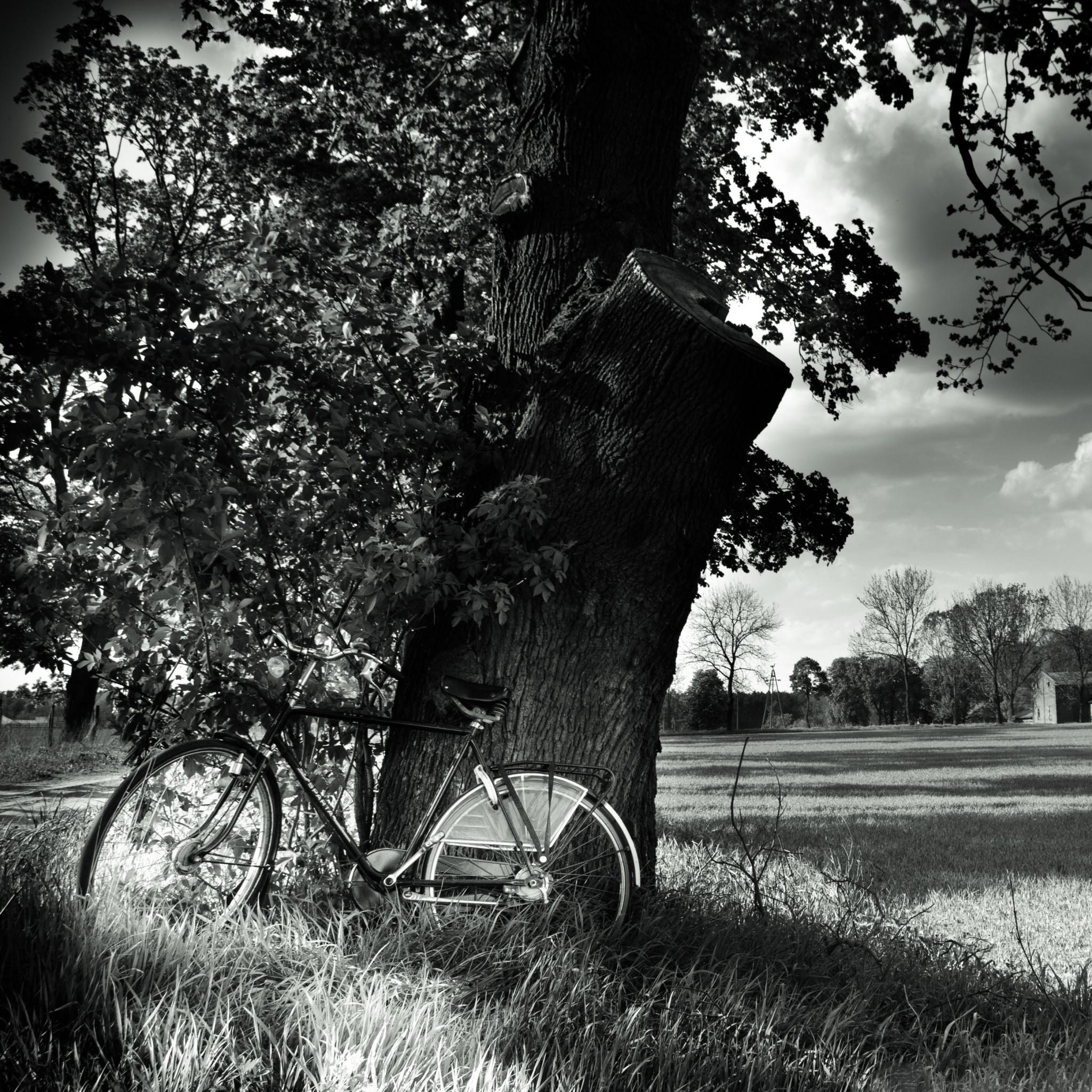 Фотообои ретро черно-белые. Купить обои в интернет ...