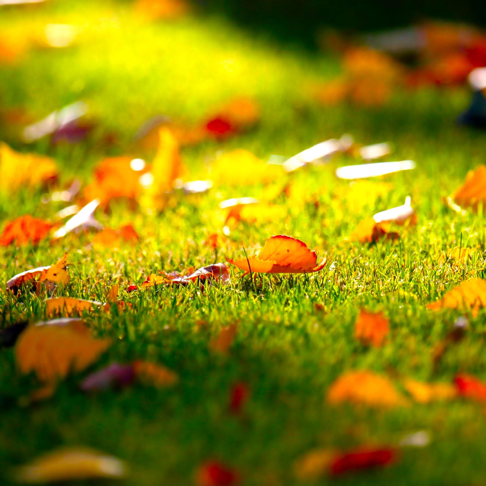 falling-leaves-3Wallpapers iPad Retina