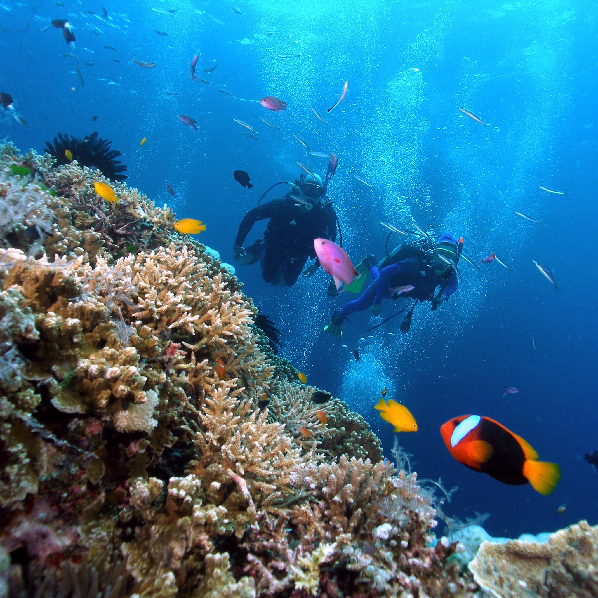 Coral Reef 3Wallpapers iPad Retina Coral Reef   iPad Retina