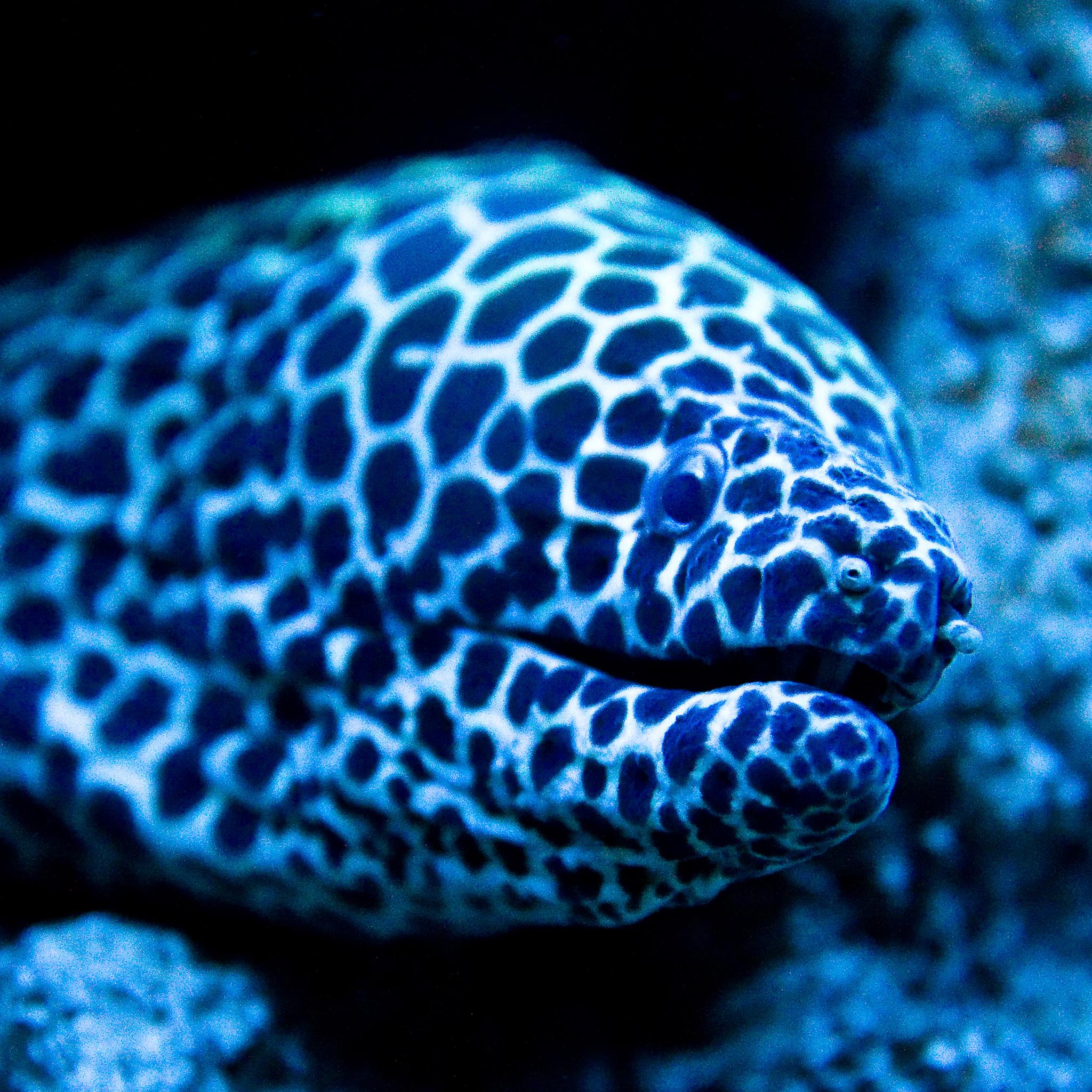 Fish Eels 3Wallpapers iPad Retina Fish Eels   iPad Retina