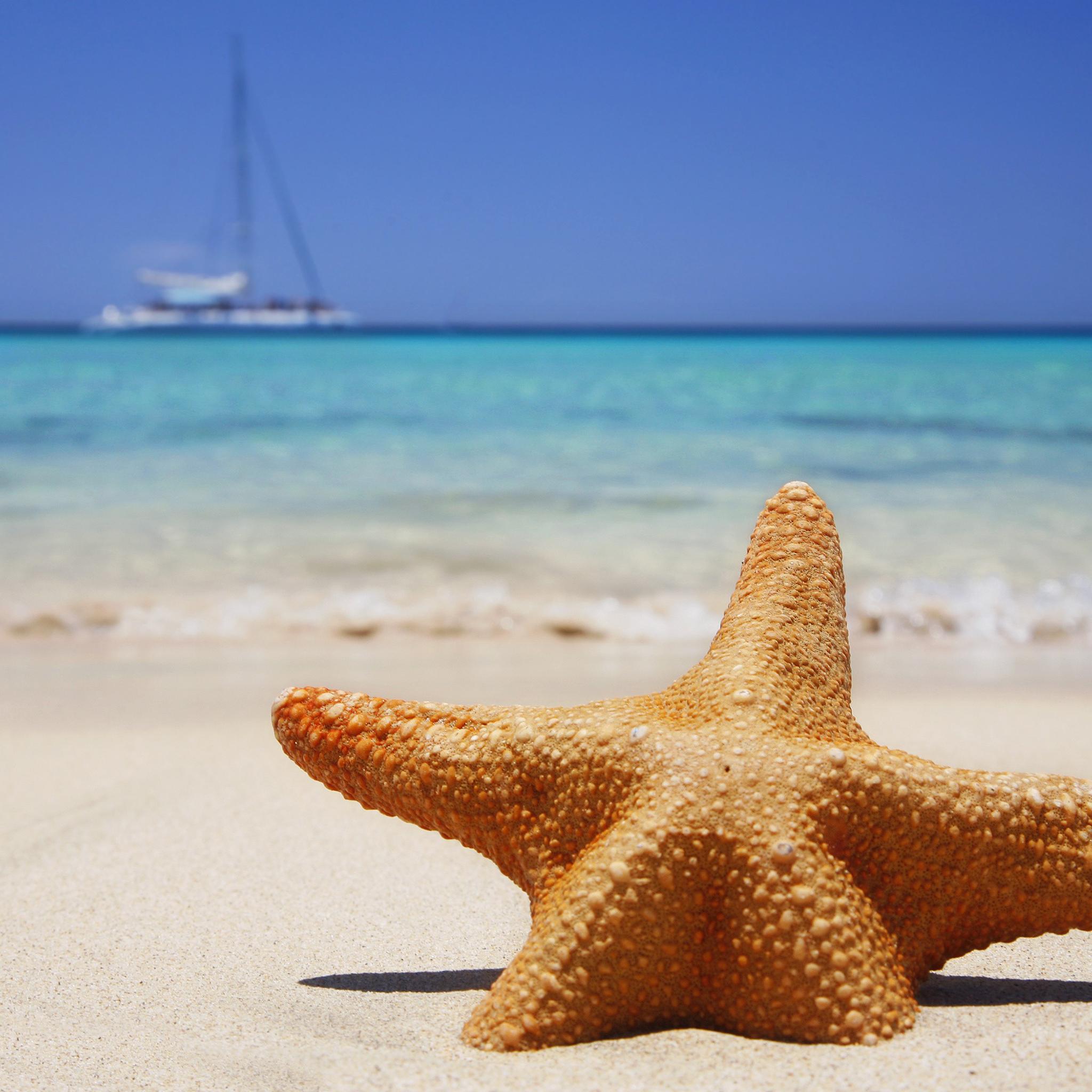 Starfish Beach 3Wallpapers IPad Retina