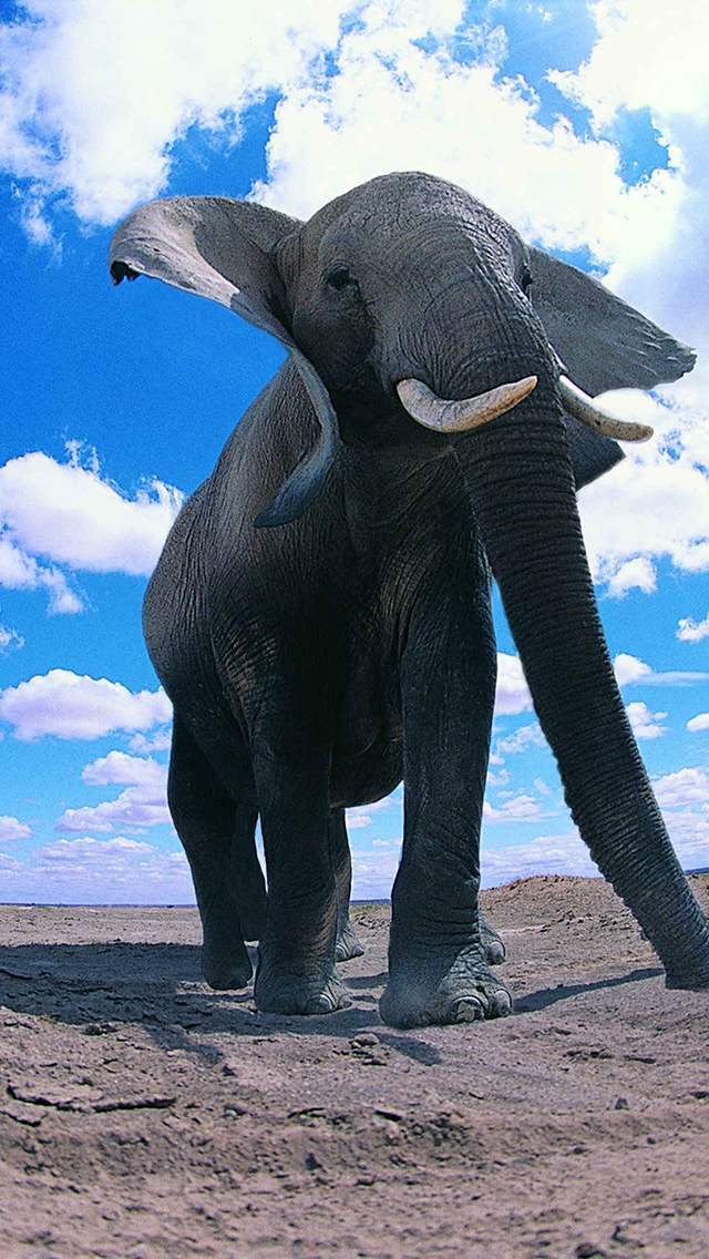 Elephants Wallpaper For Iphone X 8 7 6 Free Download On