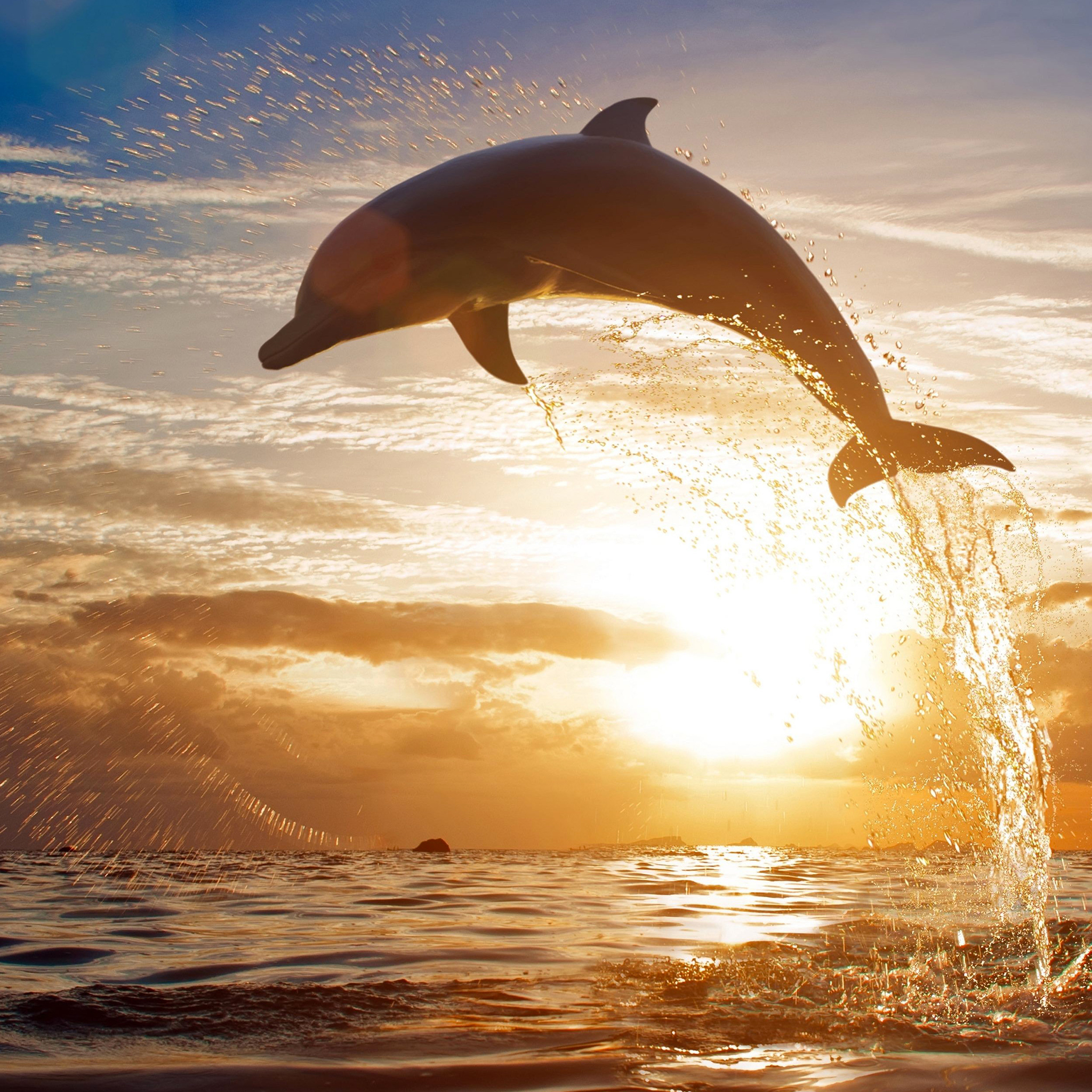 Дельфины фото на аву