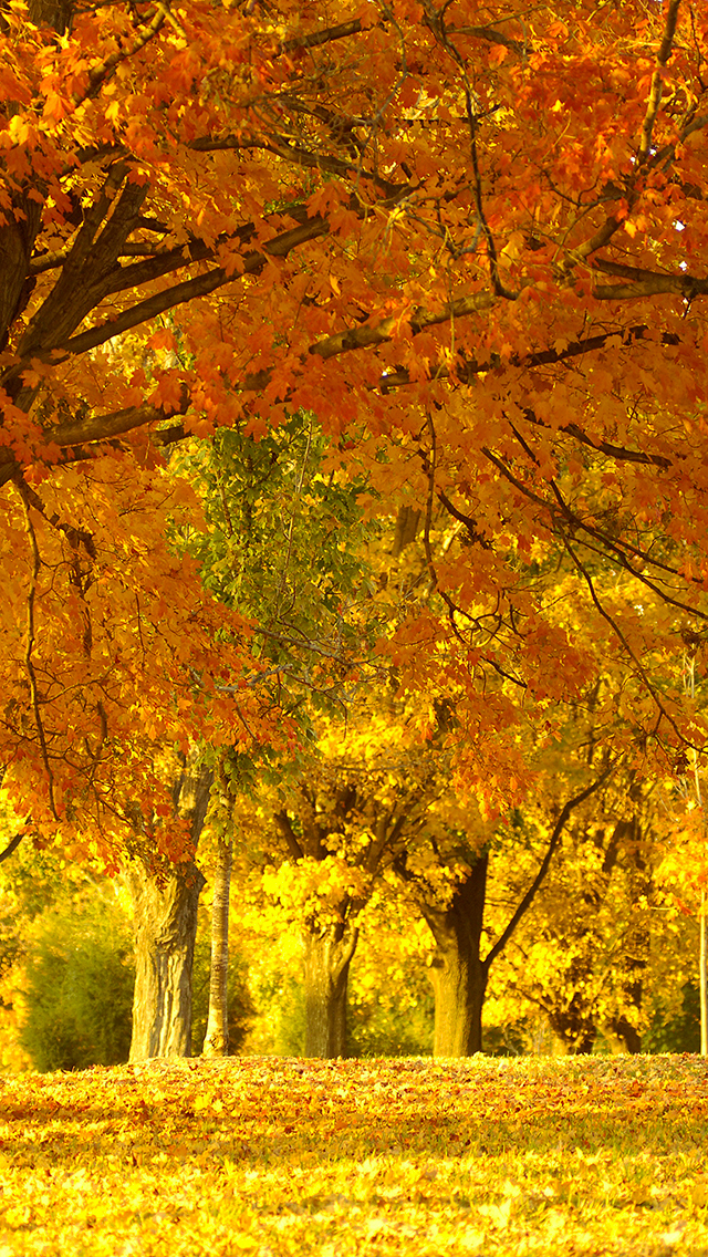 Golden Autumn Tree 3Wallpapers iPhone 5 Golden Autumn Tree