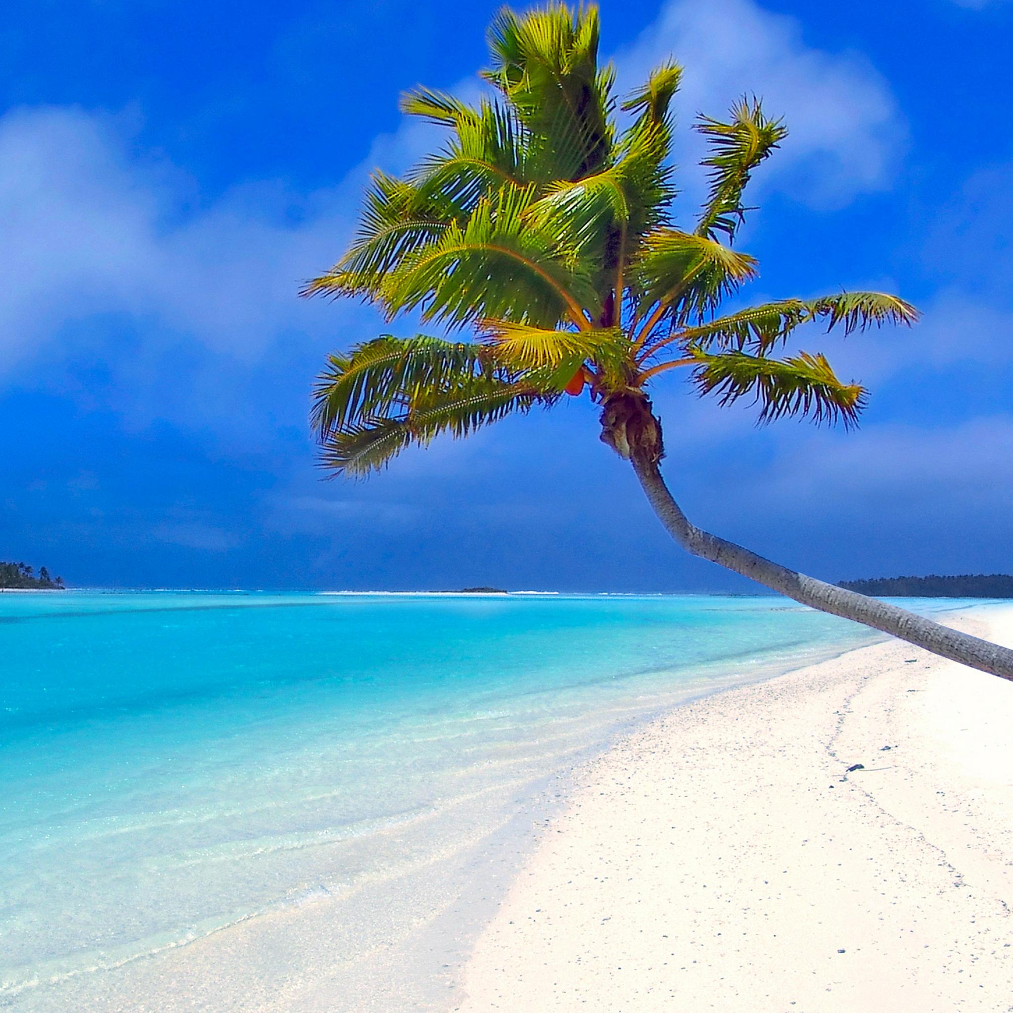 A Palm Tree On Beach Ipad Retina Wallpaper For Iphone X 8