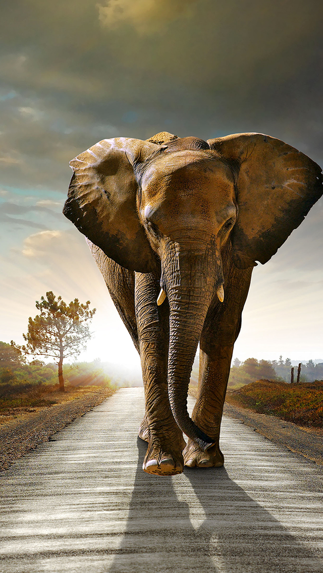 African Elephant Wallpaper For Iphone X 8 7 6 Free