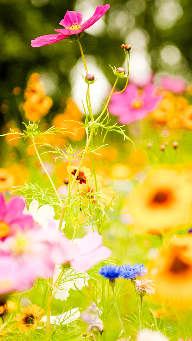 Land Flowers 3Wallpapers iPhone 5 Land Flowers