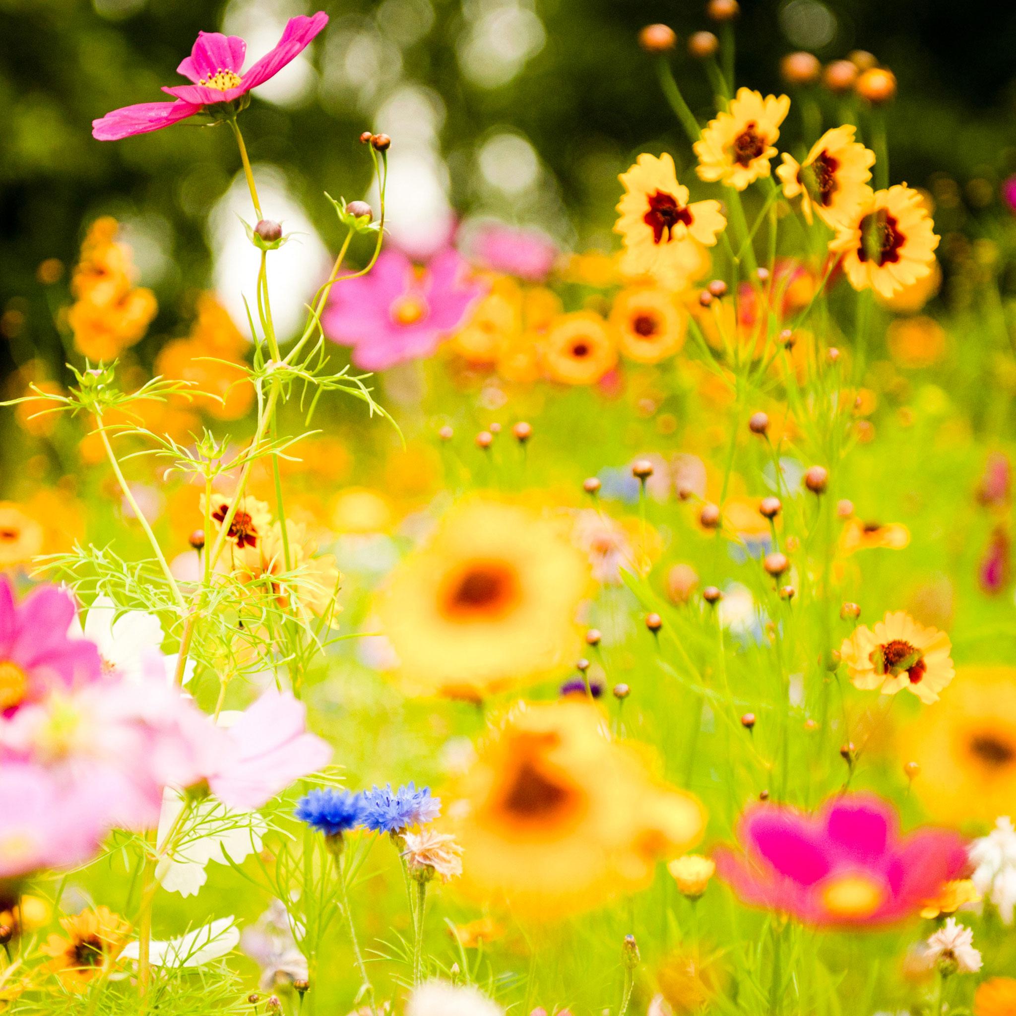 Land Flowers 3Wallpapers ipad Retina Land Flowers   iPad Retina