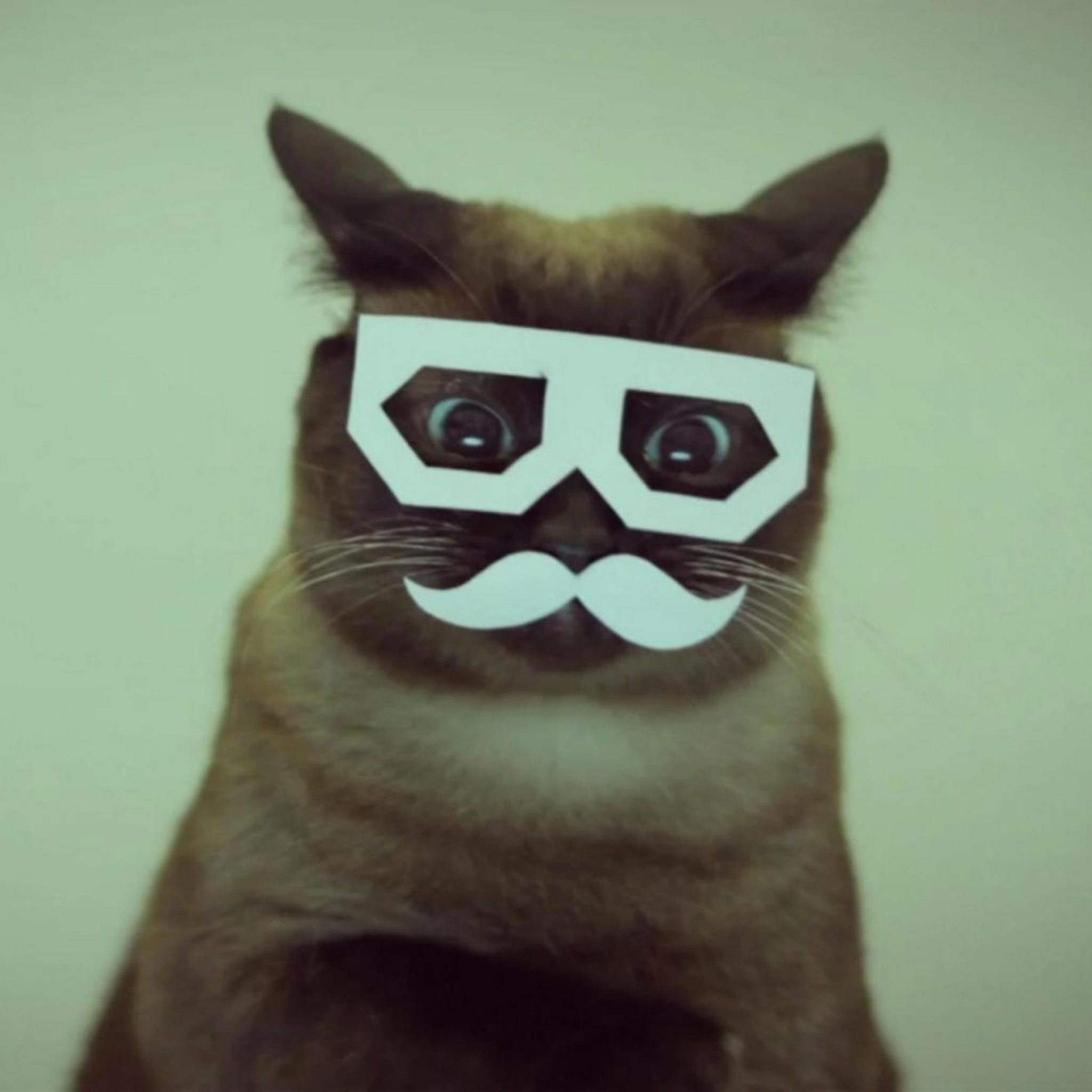 Mustache Cats 3Wallpapers IPad